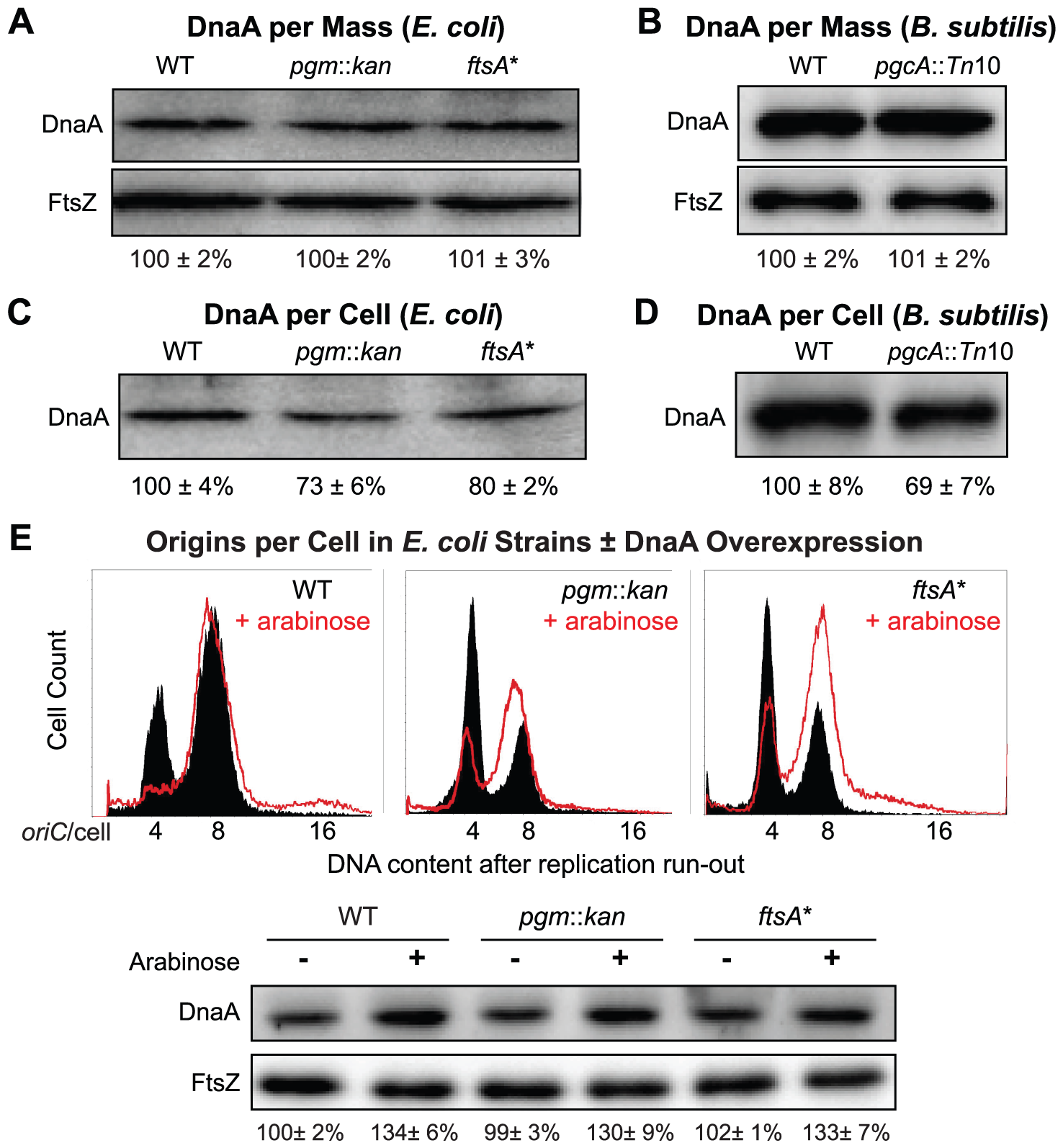 Fewer DnaA molecules in small <i>E. coli</i> and <i>B. subtilis</i> mutants.