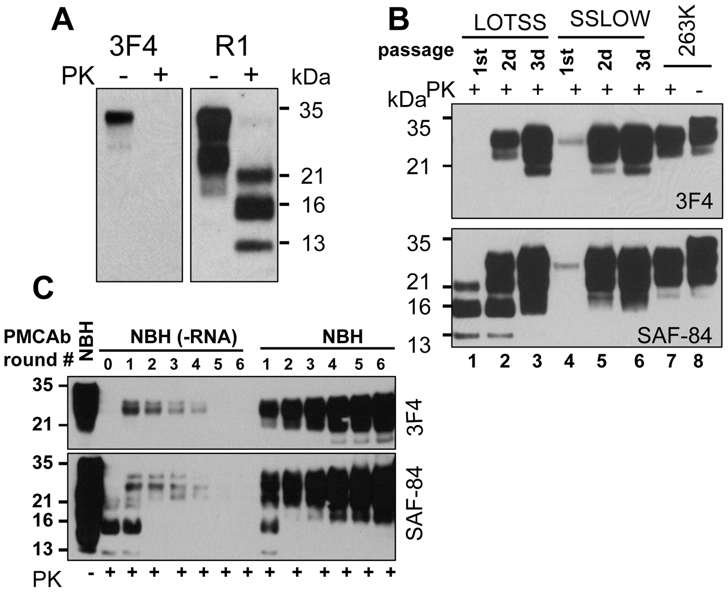 Serial passages of rPrP fibrils and <i>de novo</i> generation of PrP<sup>Sc</sup> in Syrian hamsters.