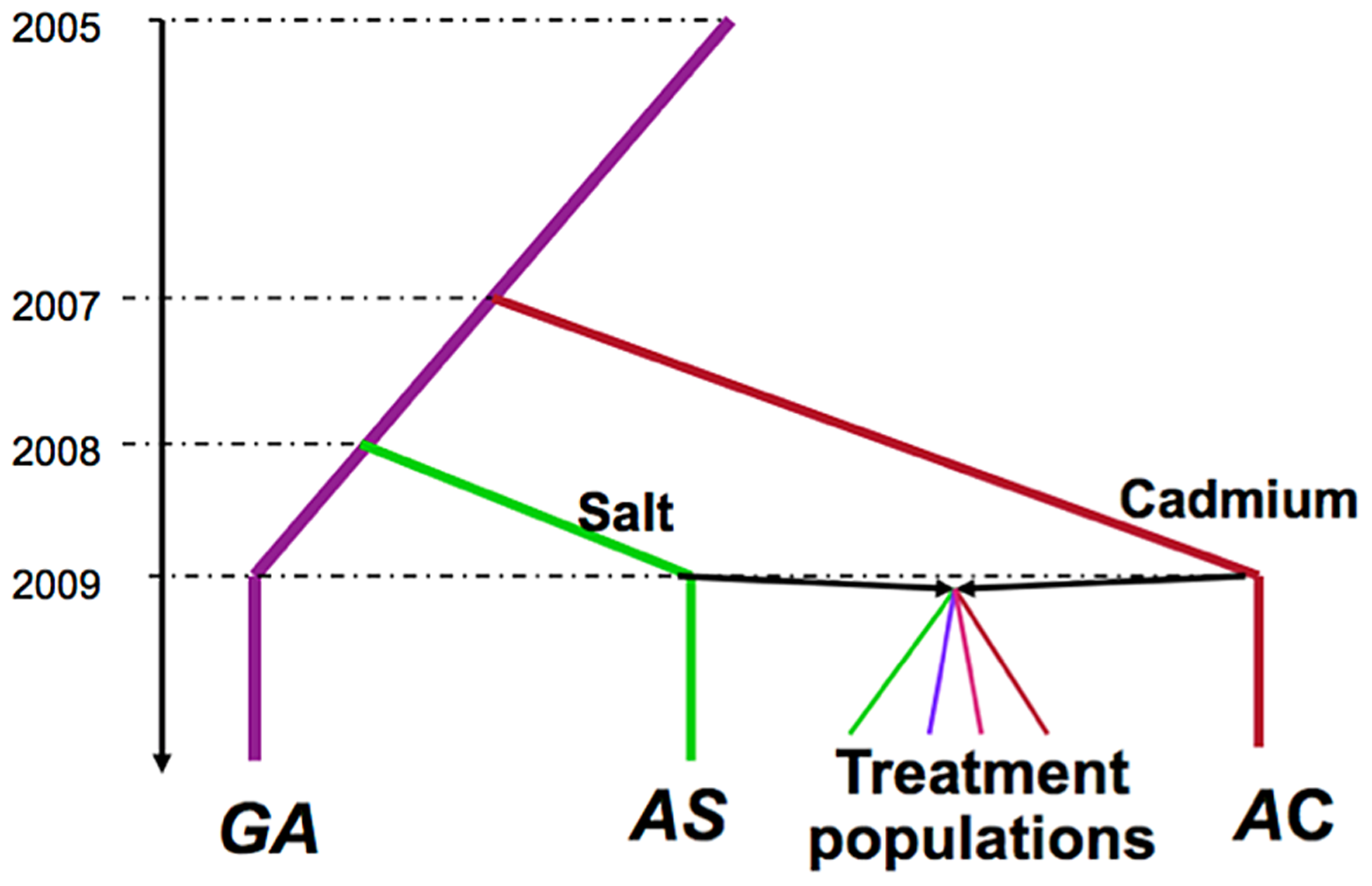 Selection history of the experimental populations.