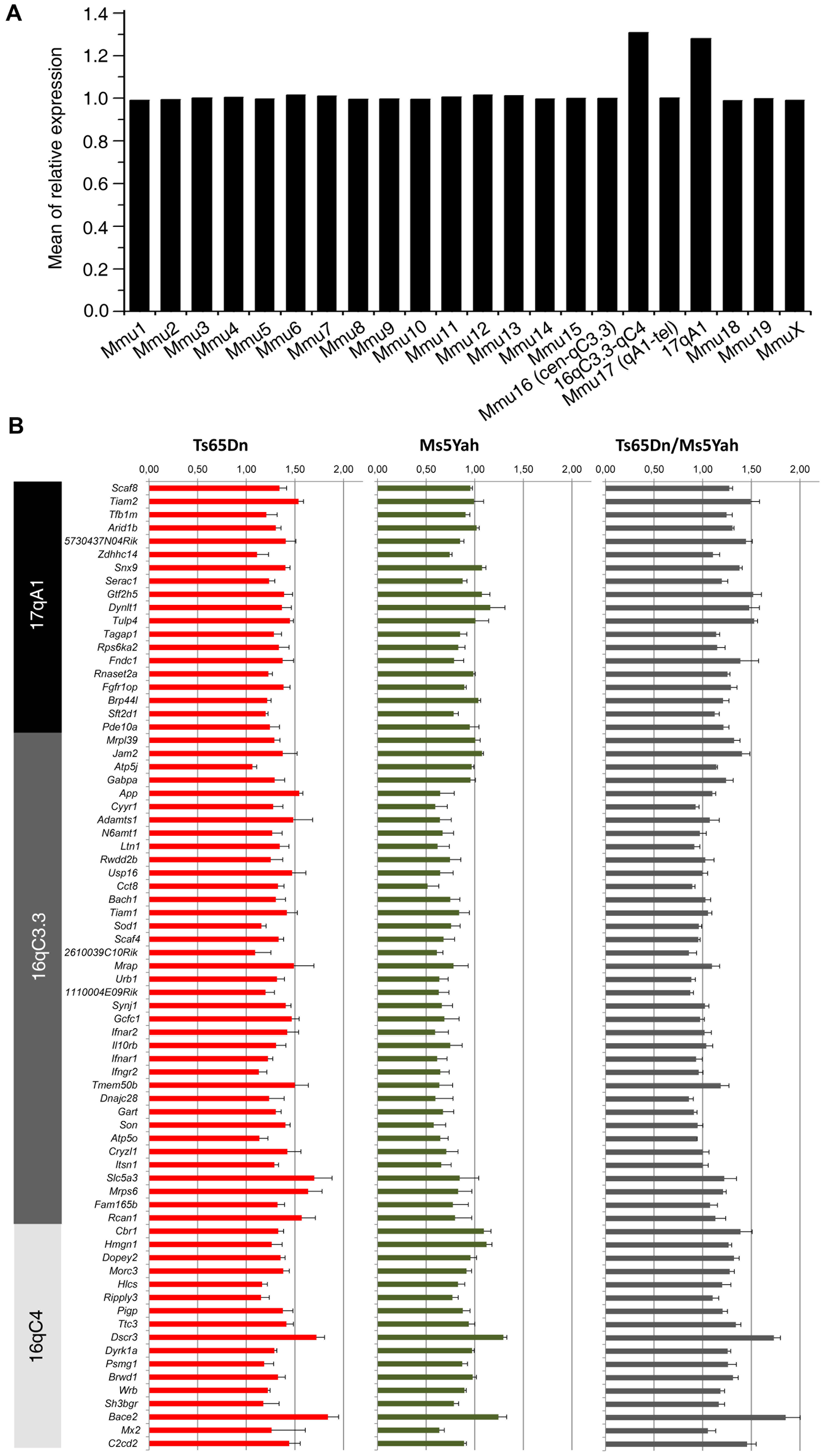 Expression profile of genes located on the Ts65Dn minichromosome obtained from whole-genome microarray expression analysis from whole adult mouse hearts.