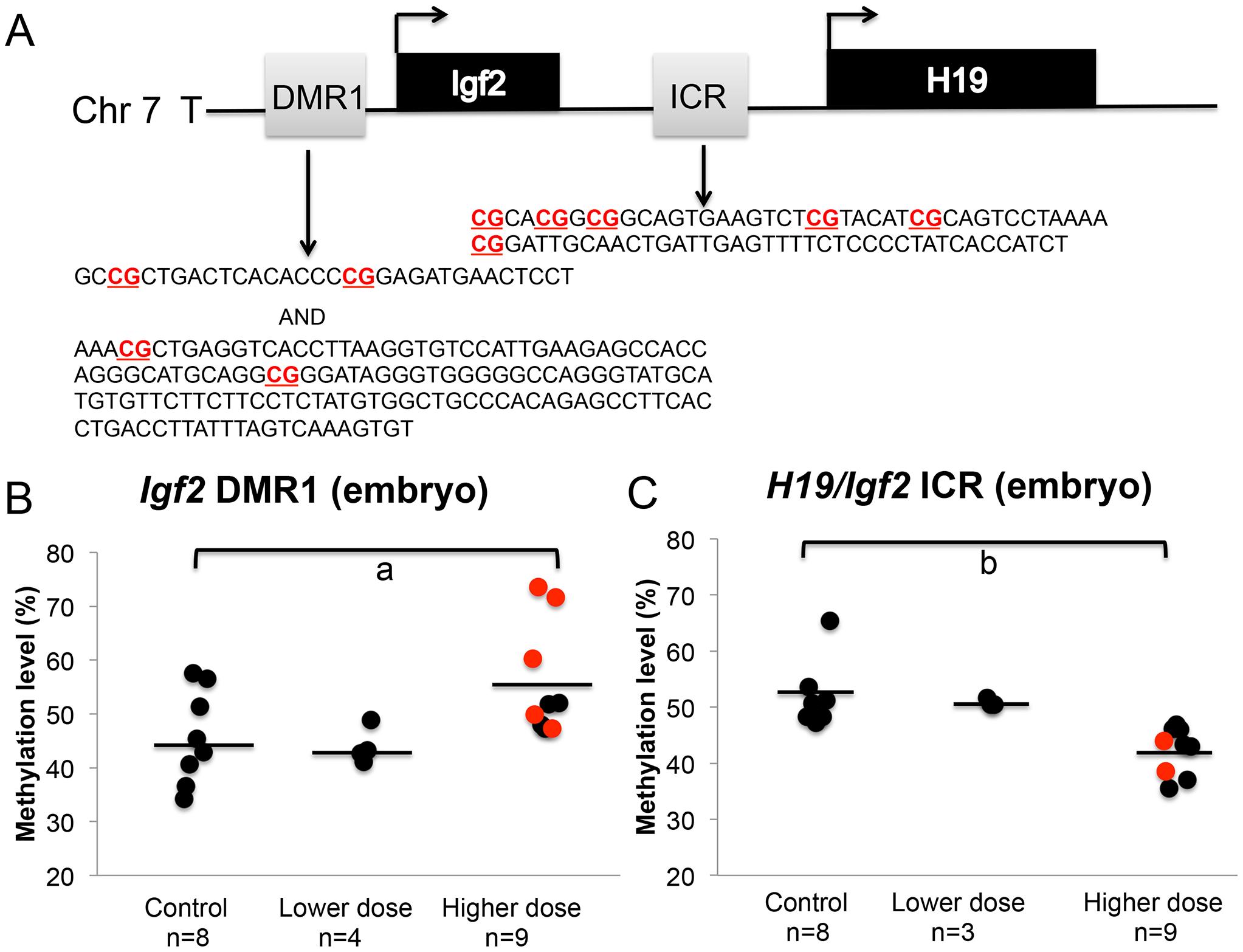 BPA exposure altered DNA methylation at the <i>Igf2</i> DMR1 and <i>H19/Igf2</i> ICR in the embryos.
