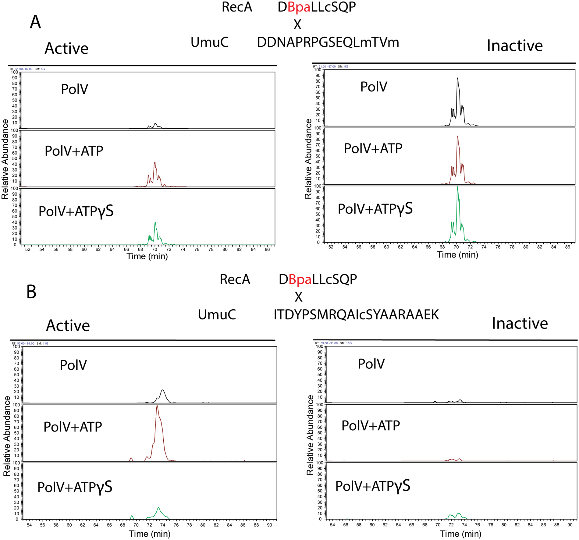 Extracted Ion Chromatograms for the RecA-UmuC cross-linked peptides.