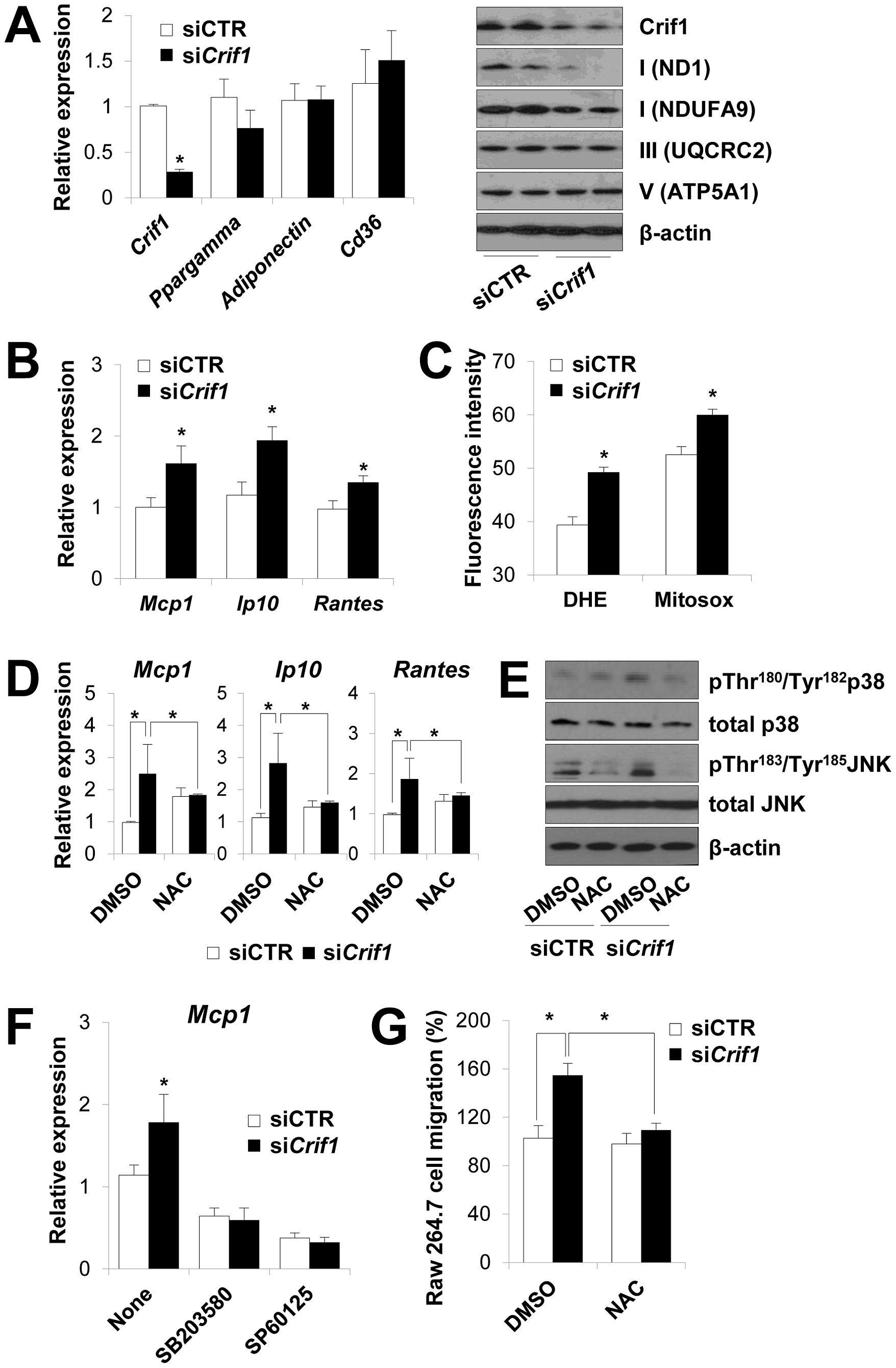 Dysregulation of chemokines and activation of stress kinases in <i>Crif1</i>-deficient 3T3-L1 adipocytes.