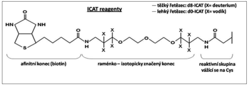 Obr. 3a. Schéma ICAT reagentu [39].