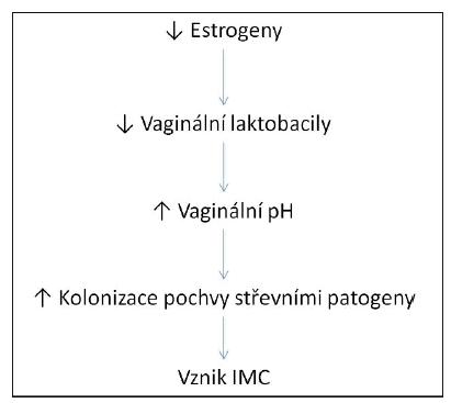 Vztah mezi poklesem estrogenů a vznikem infekce močových cest