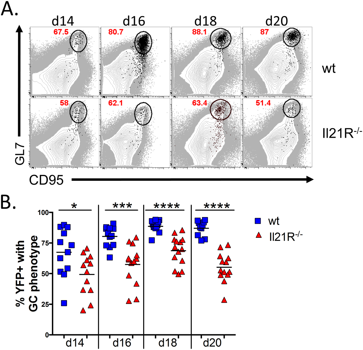 Reduced frequency of infected B cells with a germinal center phenotype in IL21-R<sup>-/-</sup> mice.