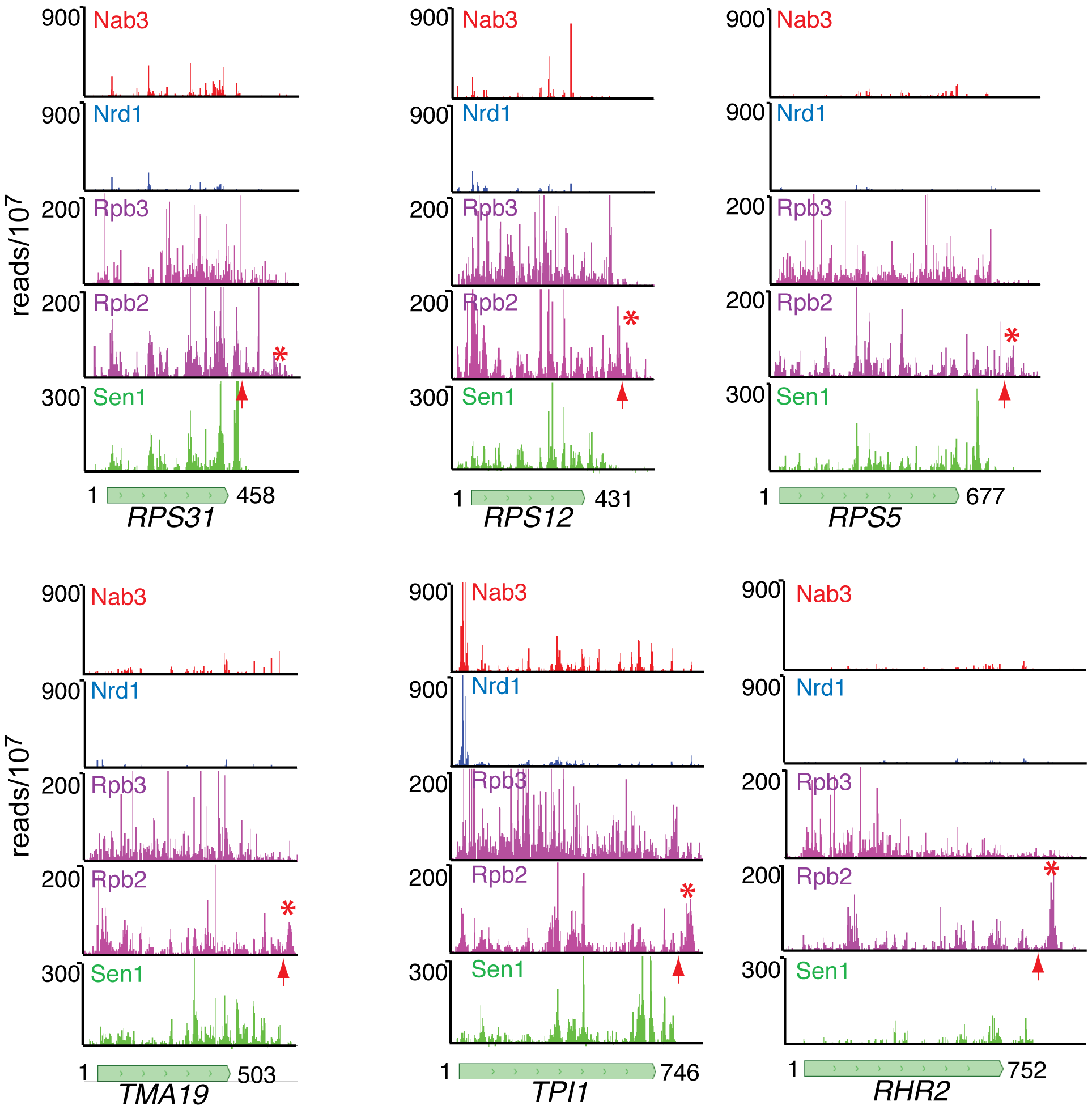 Nab3, Nrd1, Rpb2, Rpb3, and Sen1 reads distributed on a variety of genes.