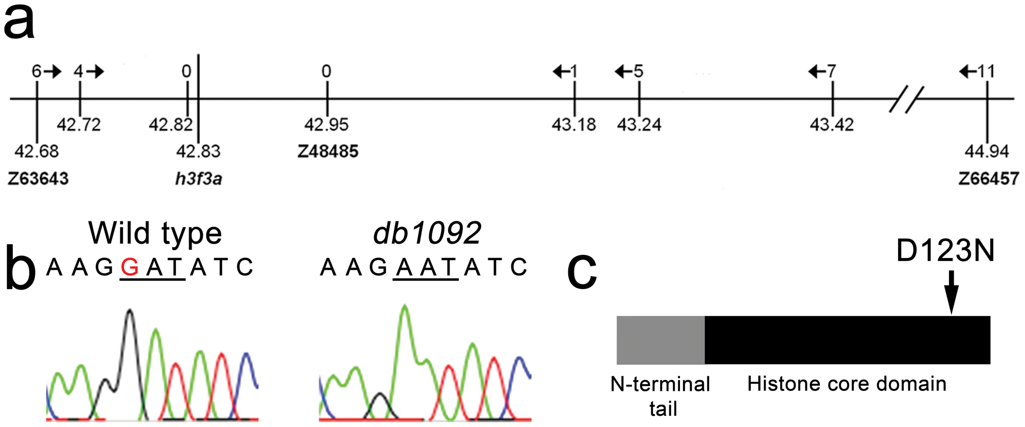 Identification of the <i>h3f3a<sup>db1092</sup></i> lesion.