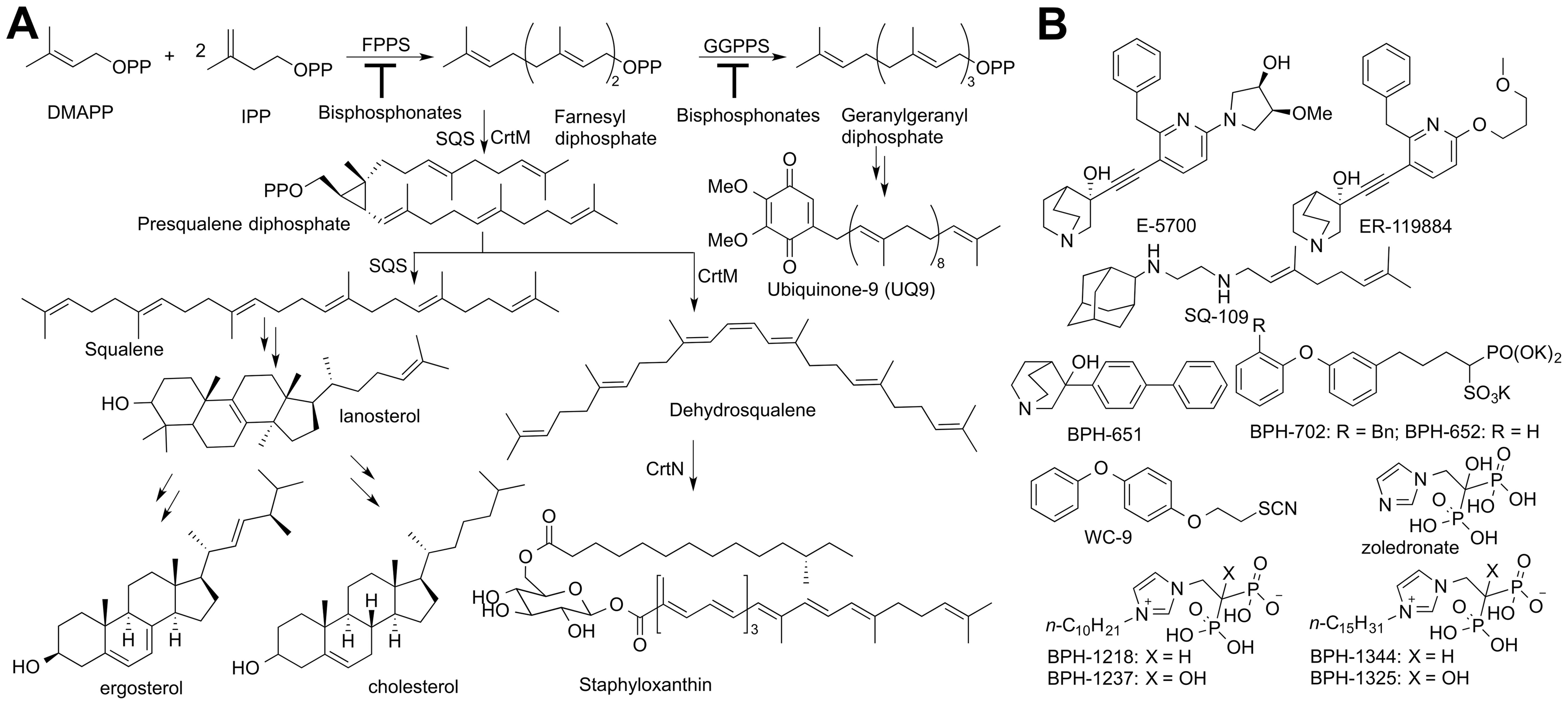 Biosynthetic pathways and structures of inhibitors.