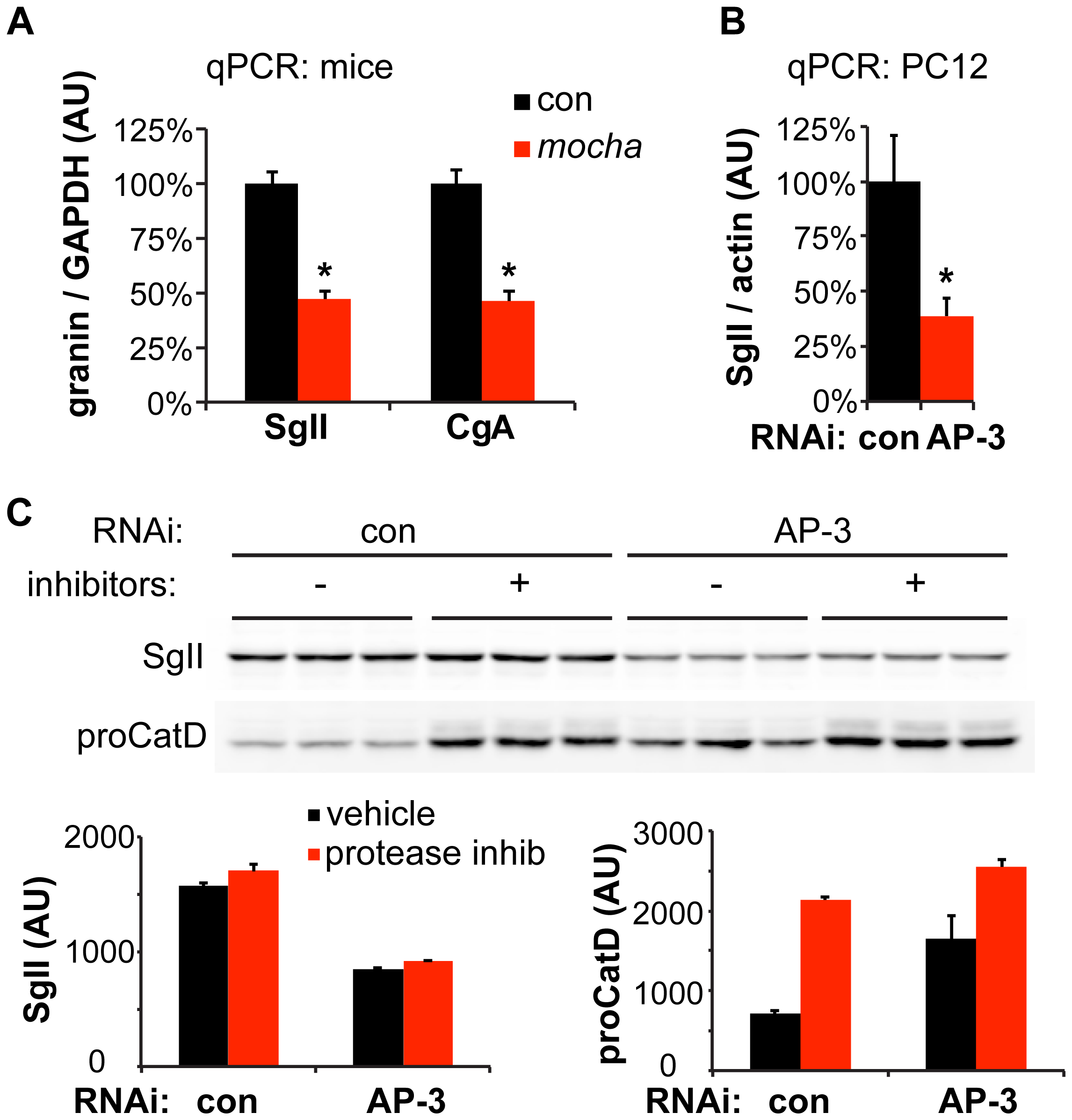 Loss of AP-3 reduces granin mRNA but does not increase its degradation.