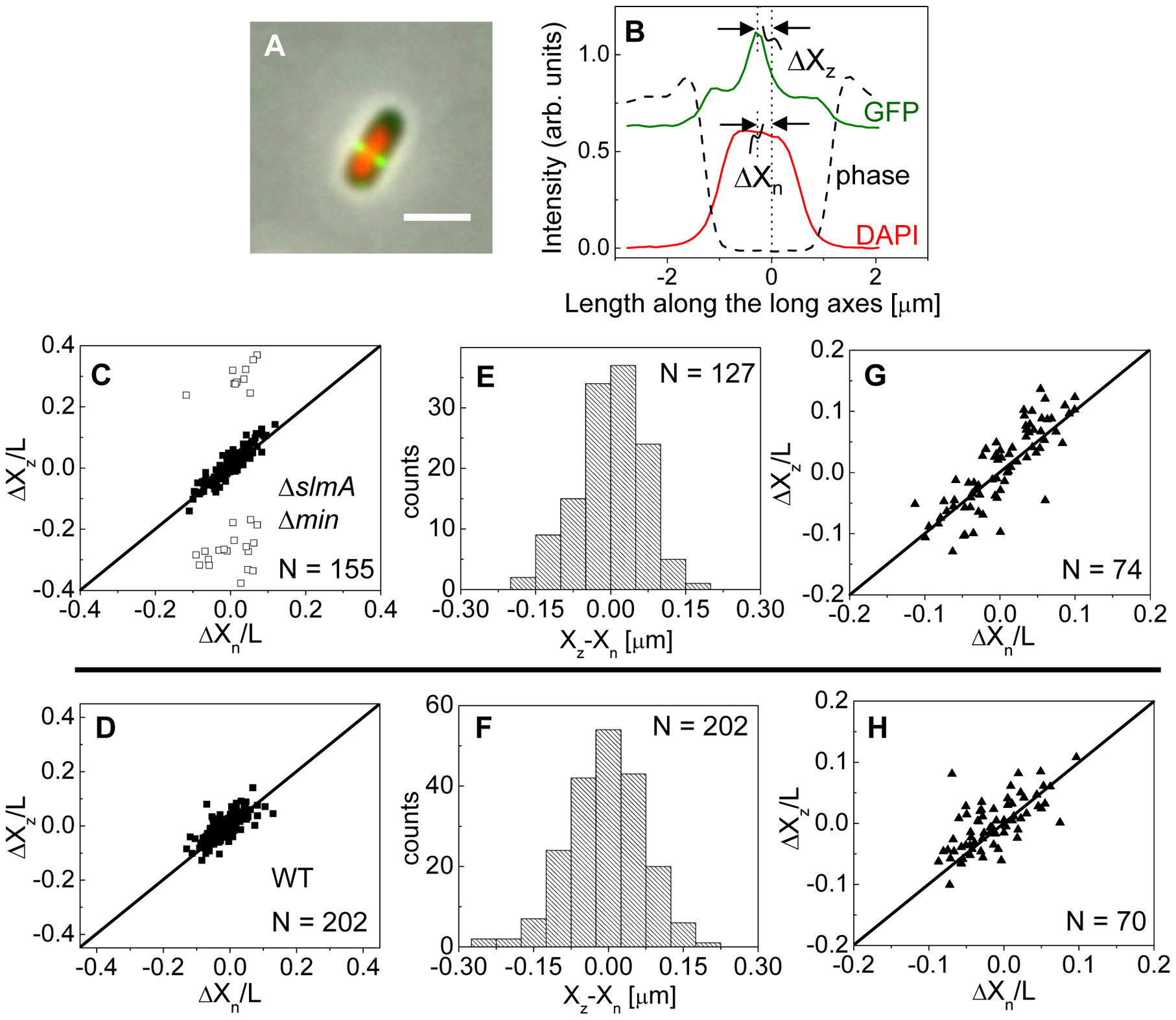 Localization of ZipA-GFP labeled Z-rings relative to cell center and the center of nucleoids.