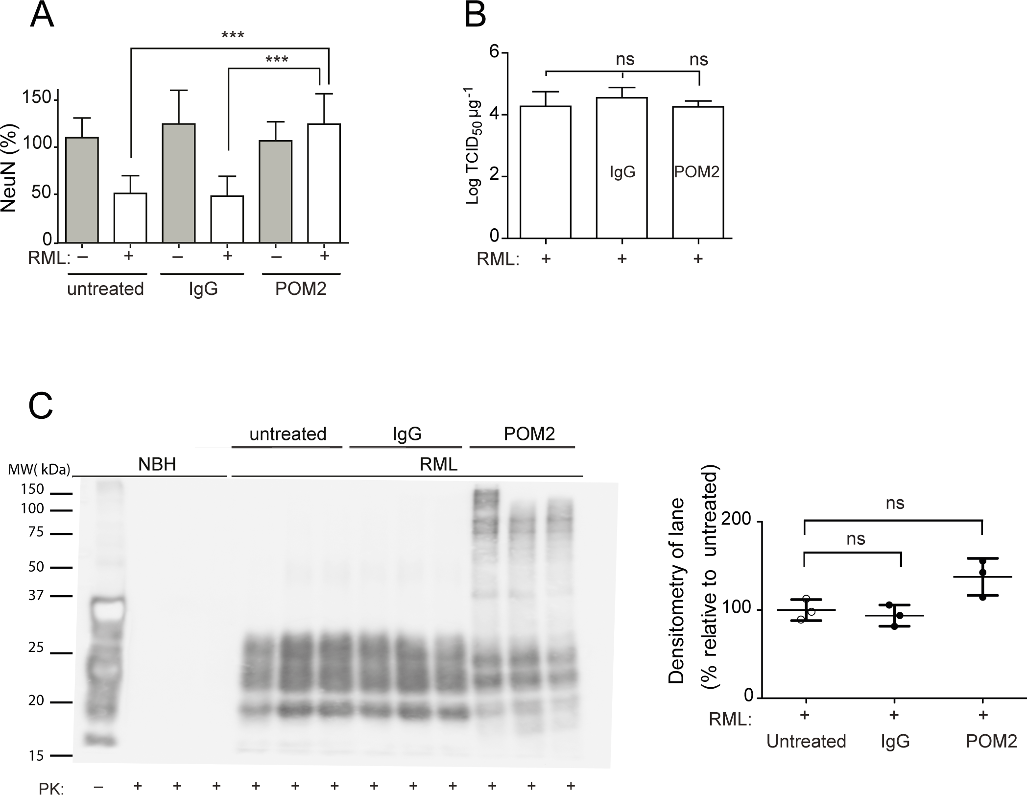 anti-FT antibody POM2 counteracts prion-induced neurotoxicity in COCS.