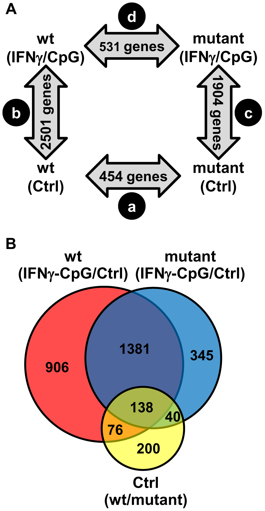 Pairwise analysis of transcriptional responses of wt and IRF8 mutant BMDMs at basal level and following exposure to IFNγ/CpG.