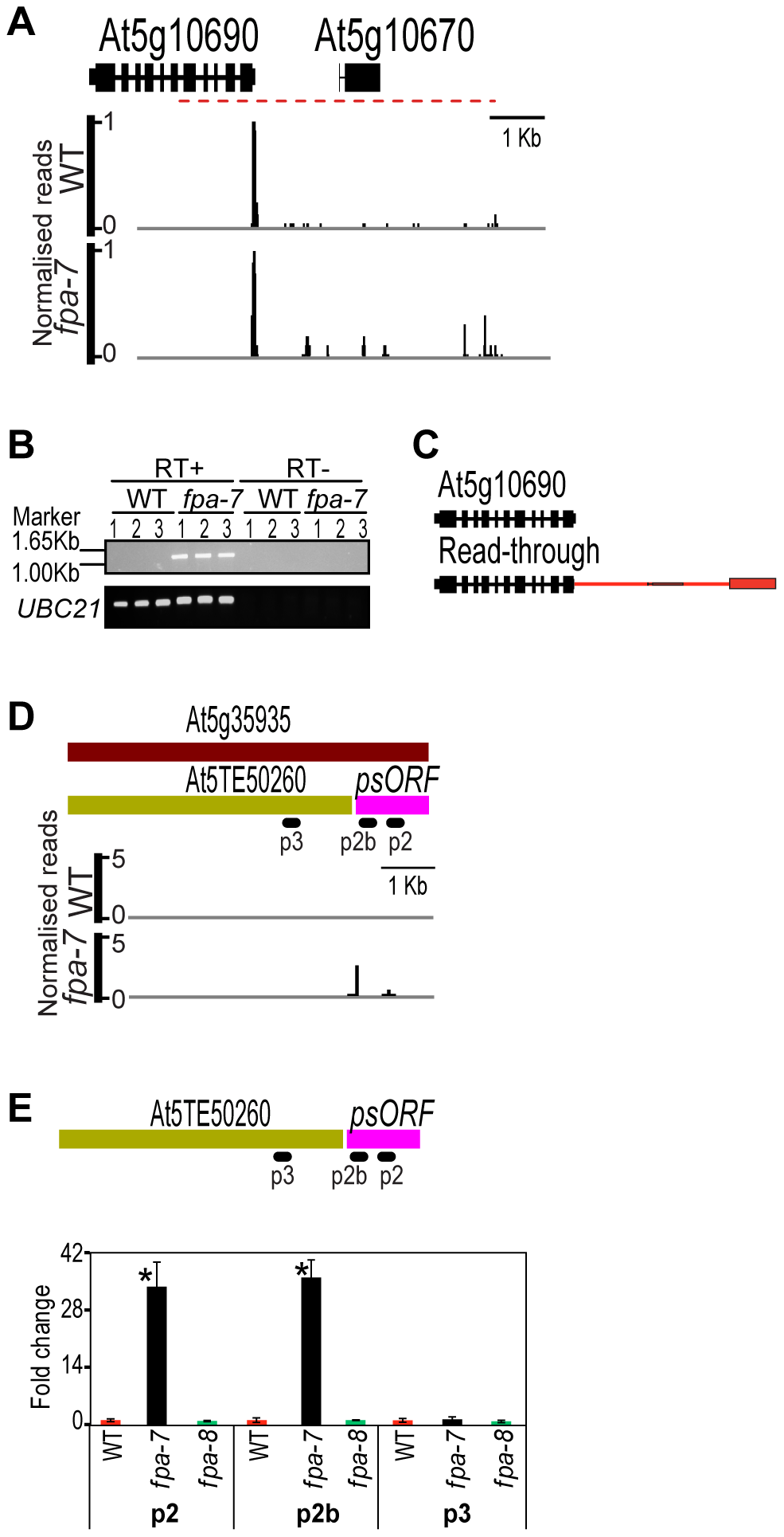 Differentially expressed transposons between wild-type and <i>fpa-7</i>.