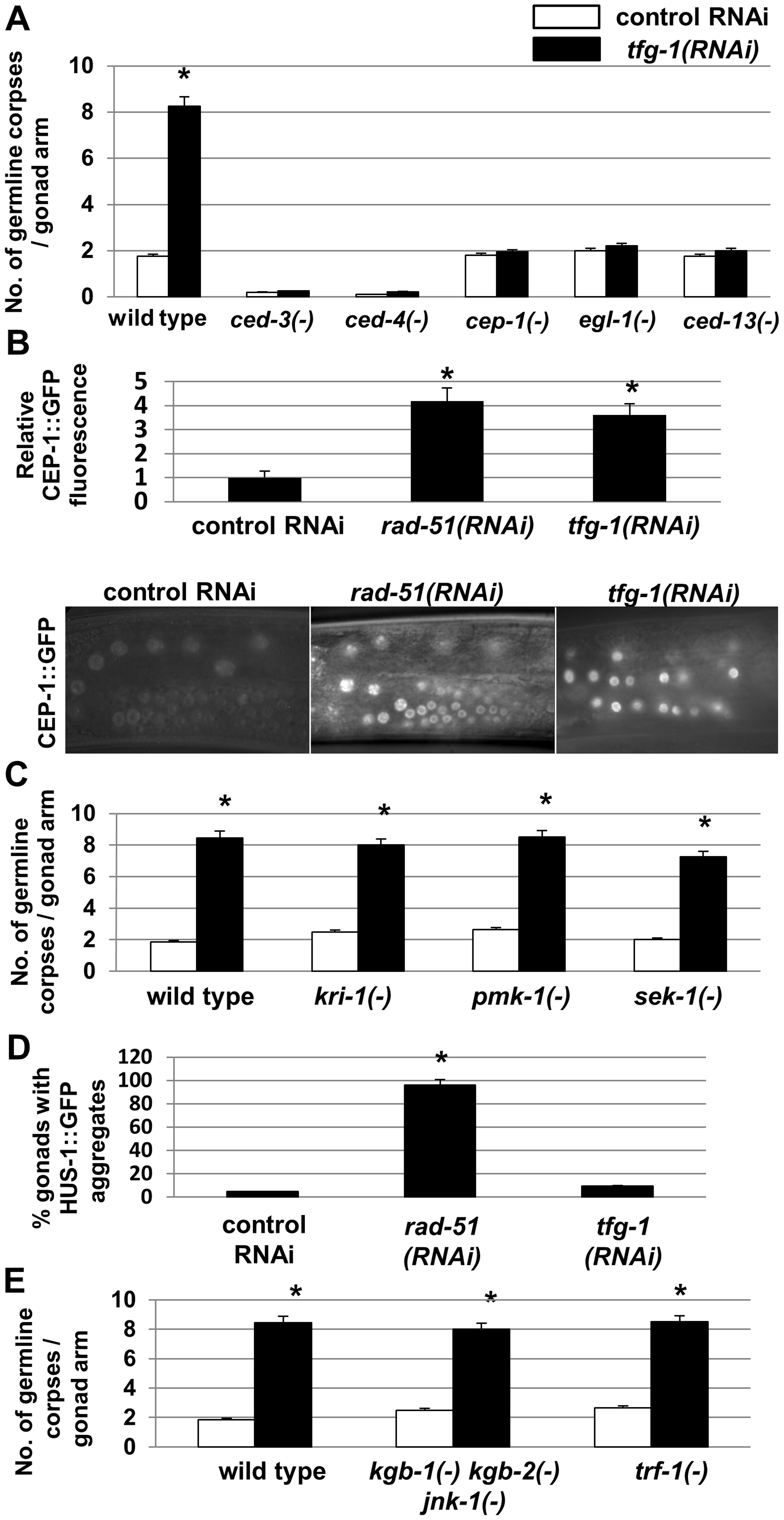 ER stress-induced germ cell apoptosis is mediated by the same apoptotic machinery implicated in DNA damage-induced apoptosis.