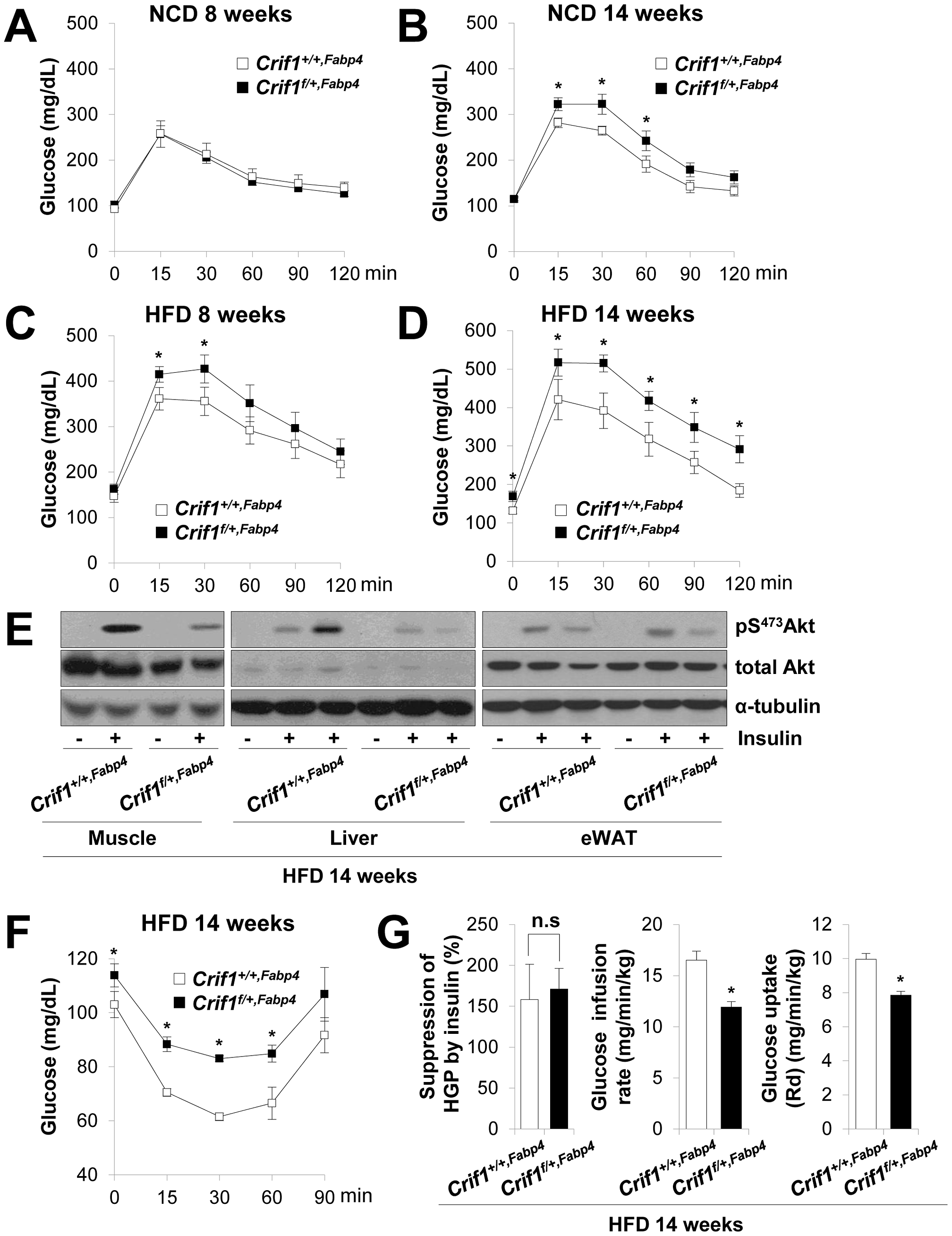 Metabolic phenotypes and insulin resistance in <i>Crif1<sup>f/+,Fabp4</sup></i> mice.