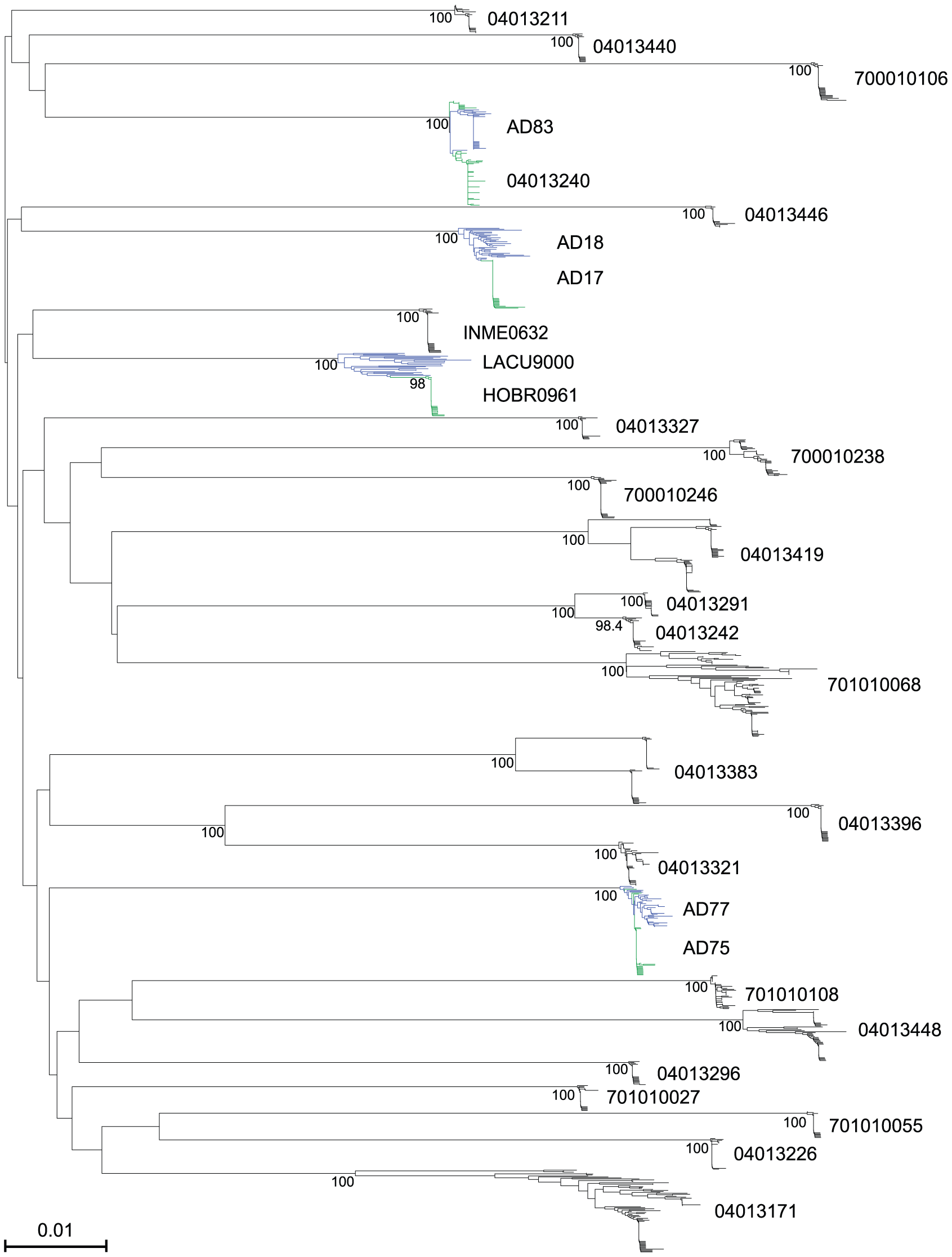 Neighbor-joining (NJ) tree of full-length HIV-1 gp160 env sequences from 28 acutely infected subjects and 2 chronically infected sexual partners.