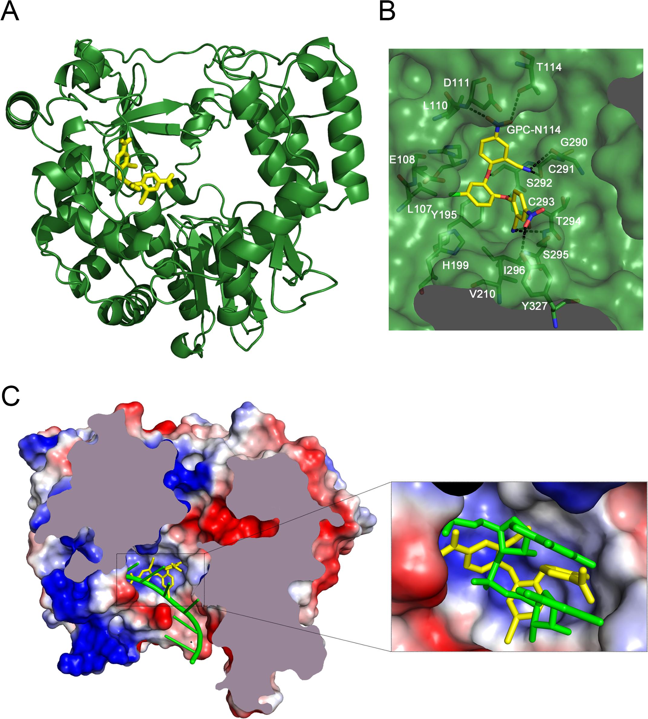 The binding site of GPC-N114 on CVB3 3D<sup>pol</sup>.