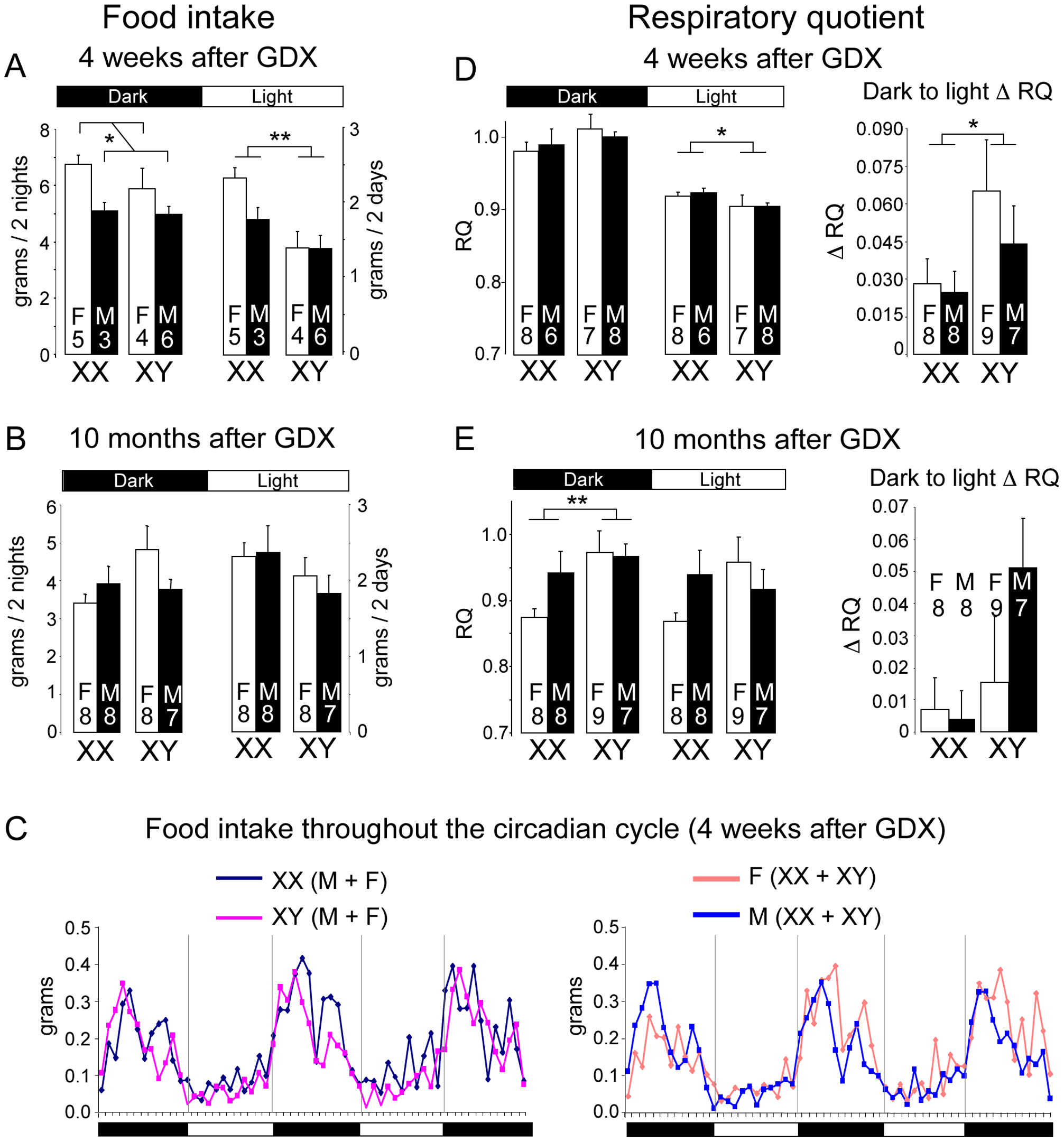 Altered food intake and RQ in XX versus XY mice.
