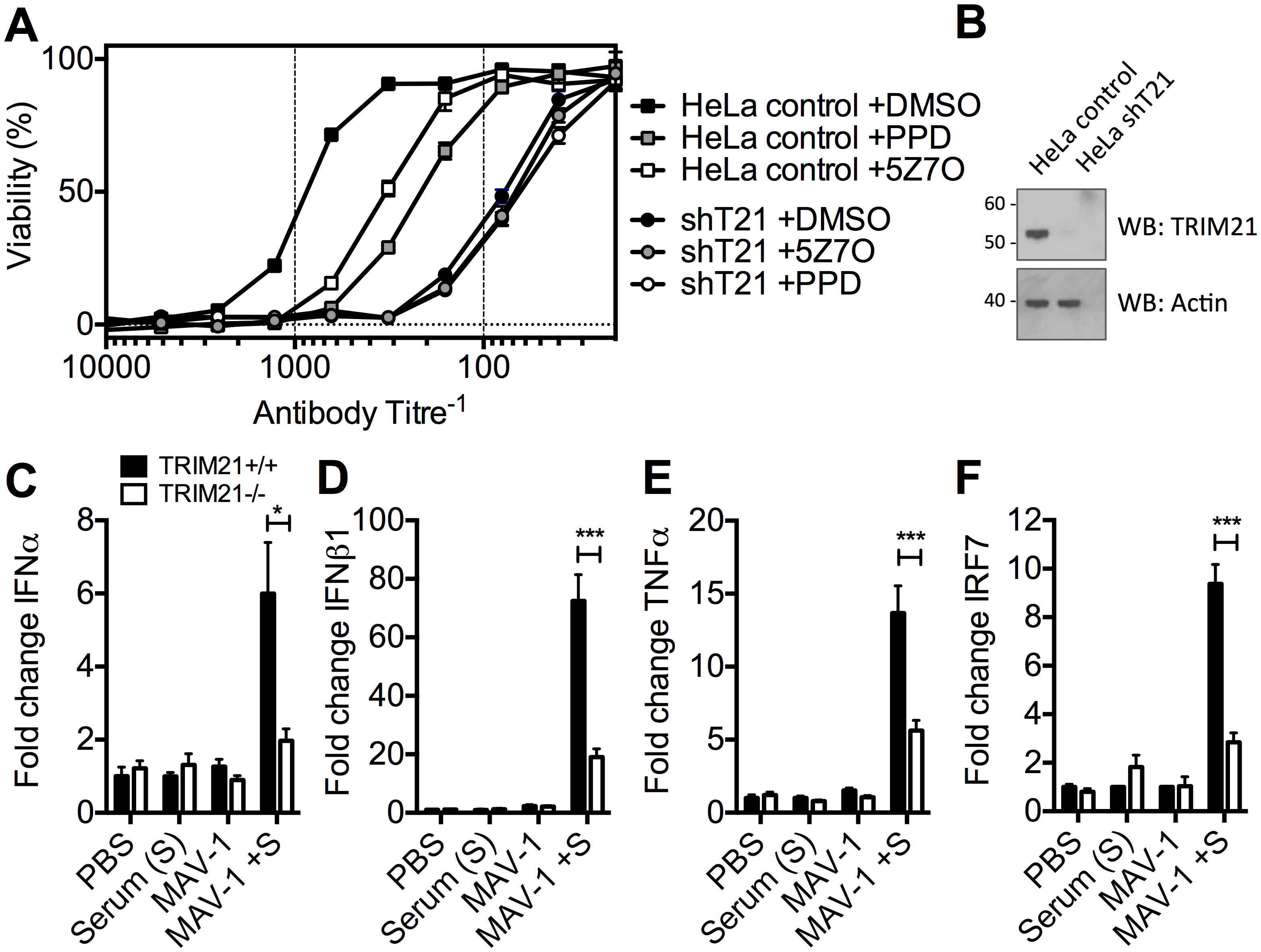 TRIM21-dependent signaling aids control of viral replication, and promotes inflammation <i>in vivo</i>.