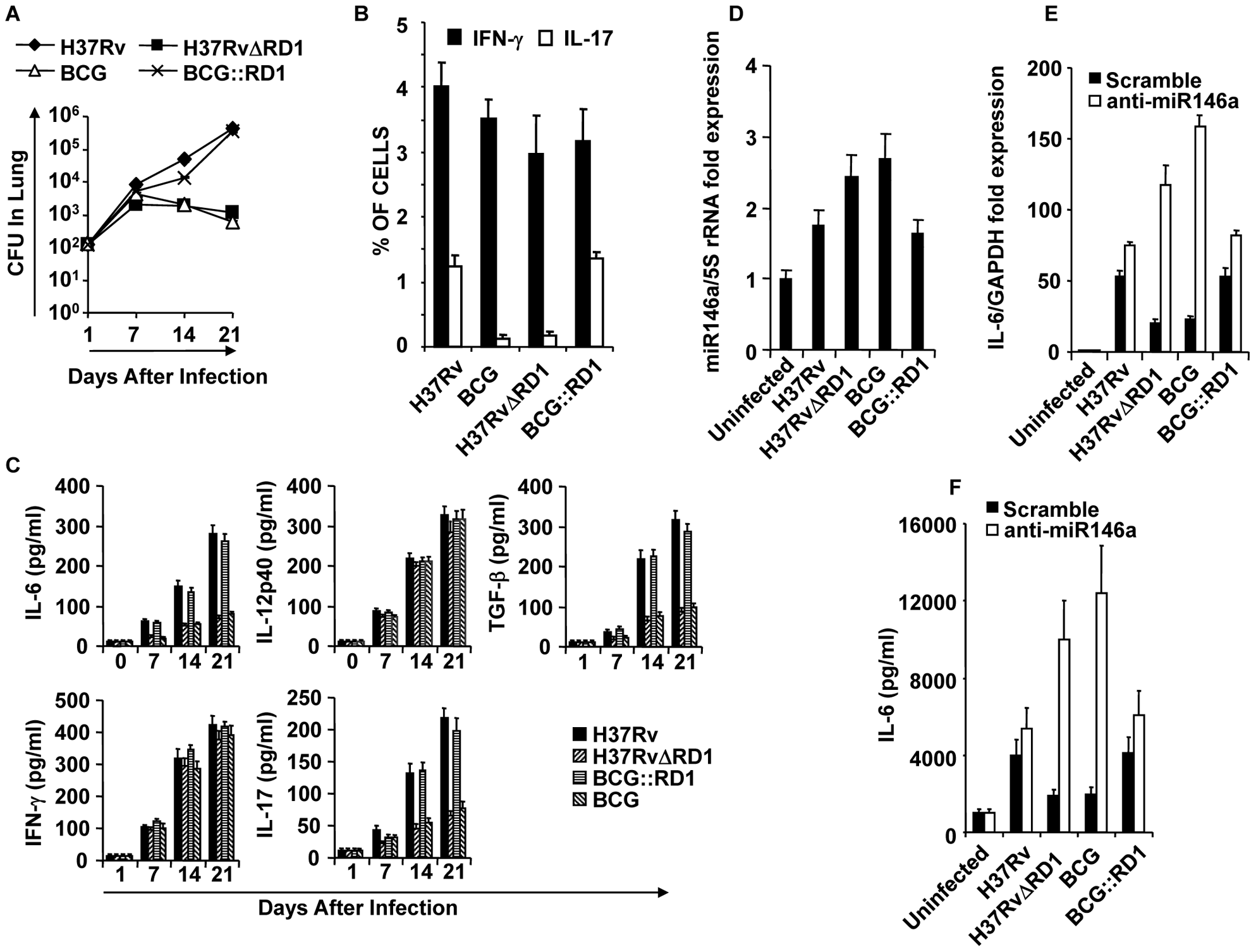 Infection with H37Rv or BCG::RD1 induces both Th1 and Th17 immunity, whereas BCG and H37RvΔRD1 selectively induce Th1 cell responses in the lung.