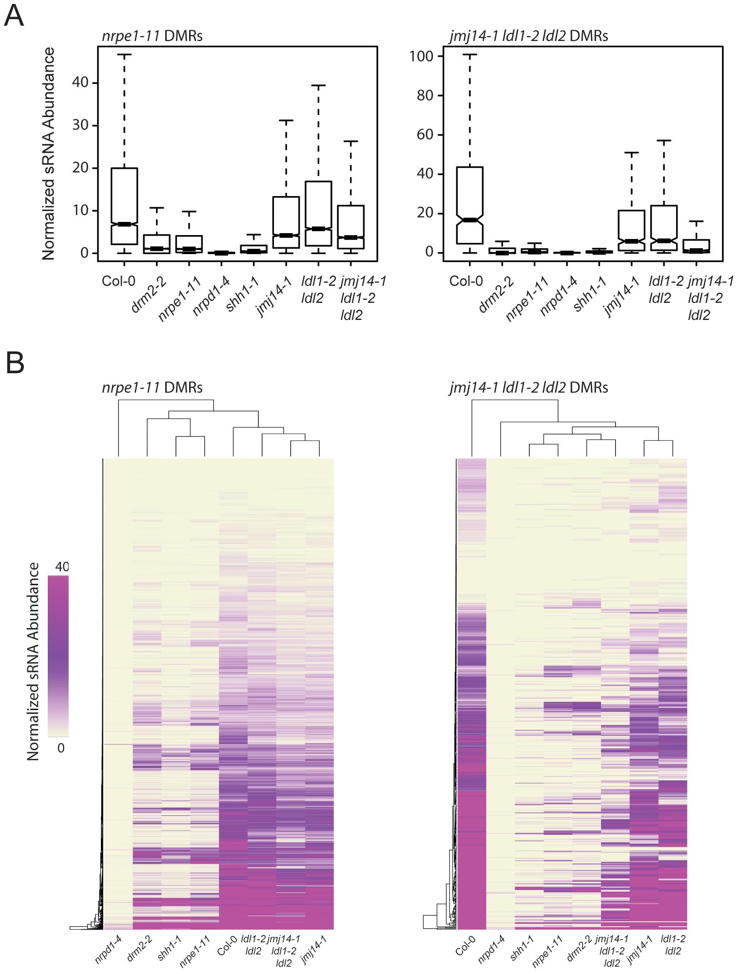 <i>jmj14-1 ldl1-2 ldl2</i> triple mutants are deficient for sRNA production at affected DMRs.