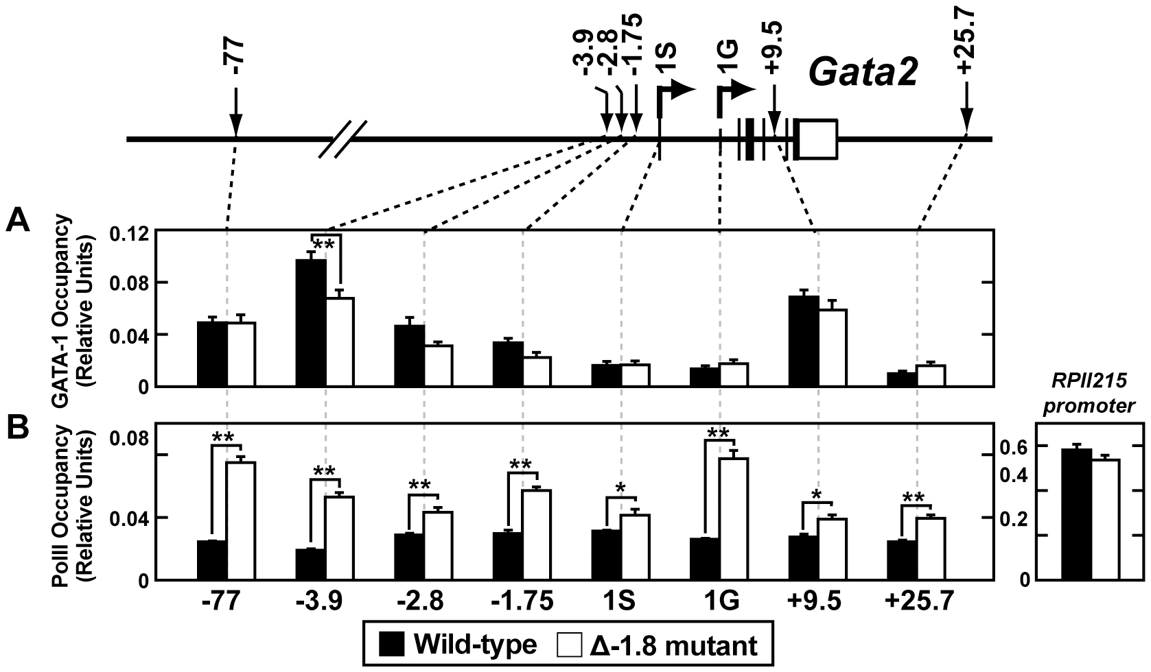 Loss of the −1.8 kb site leads to increased RNA Pol II occupancy of the <i>Gata2</i> locus.