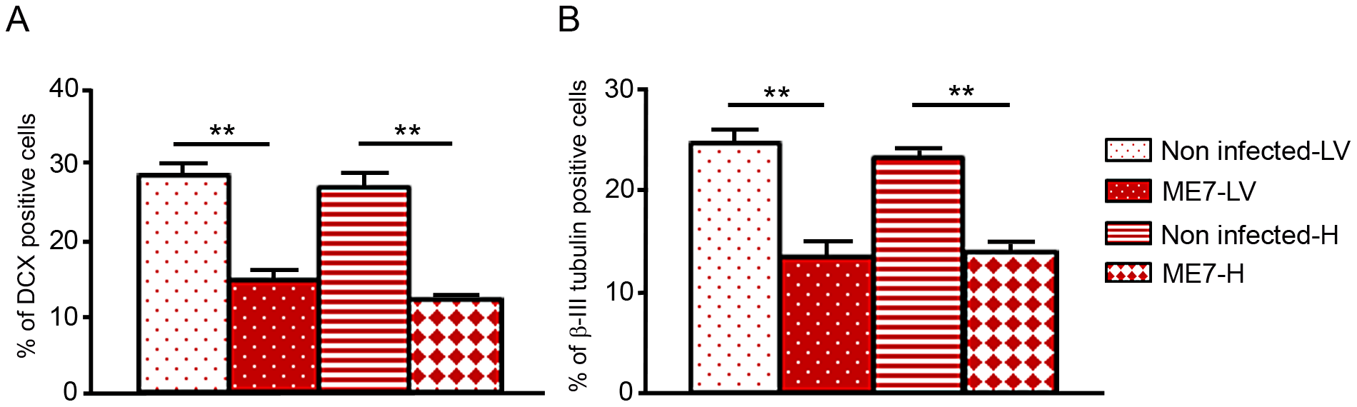 Prion infection and replication during differentiation impairs neural differentiation.
