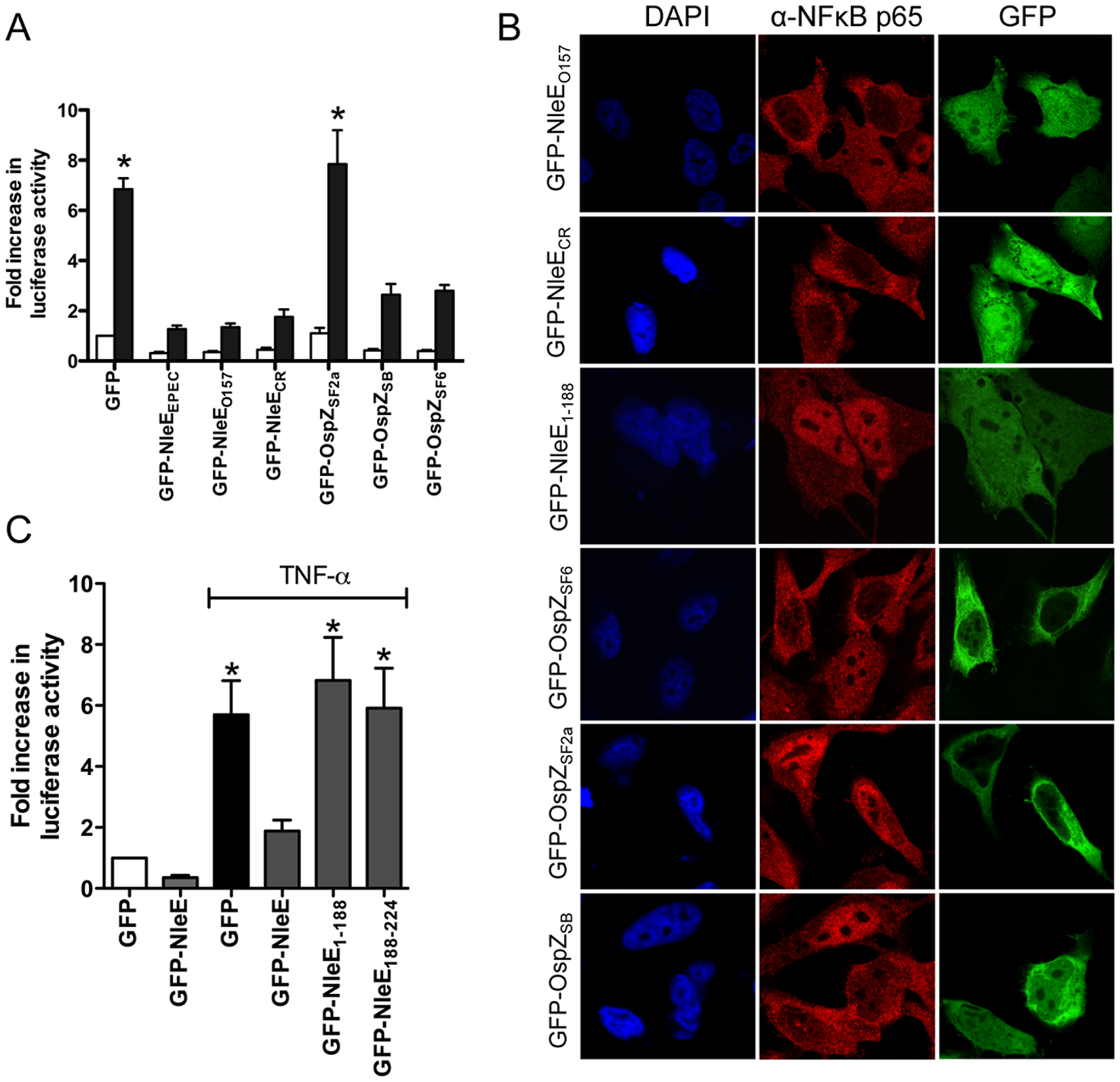 Effect of NleE and OspZ homologues on NF-κB activation.