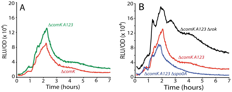 Effect of combined mutation of <i>A1</i>, <i>2</i>, and <i>3</i> on P<i>comK</i> expression.
