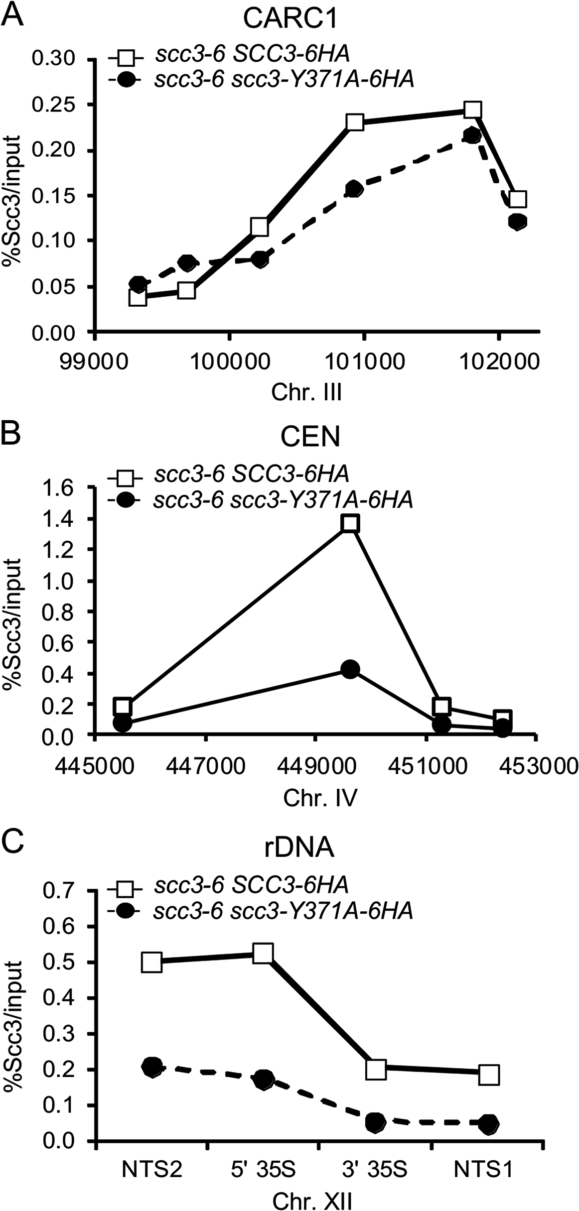 scc3 Y371 binding to the <i>rDNA</i> is reduced.