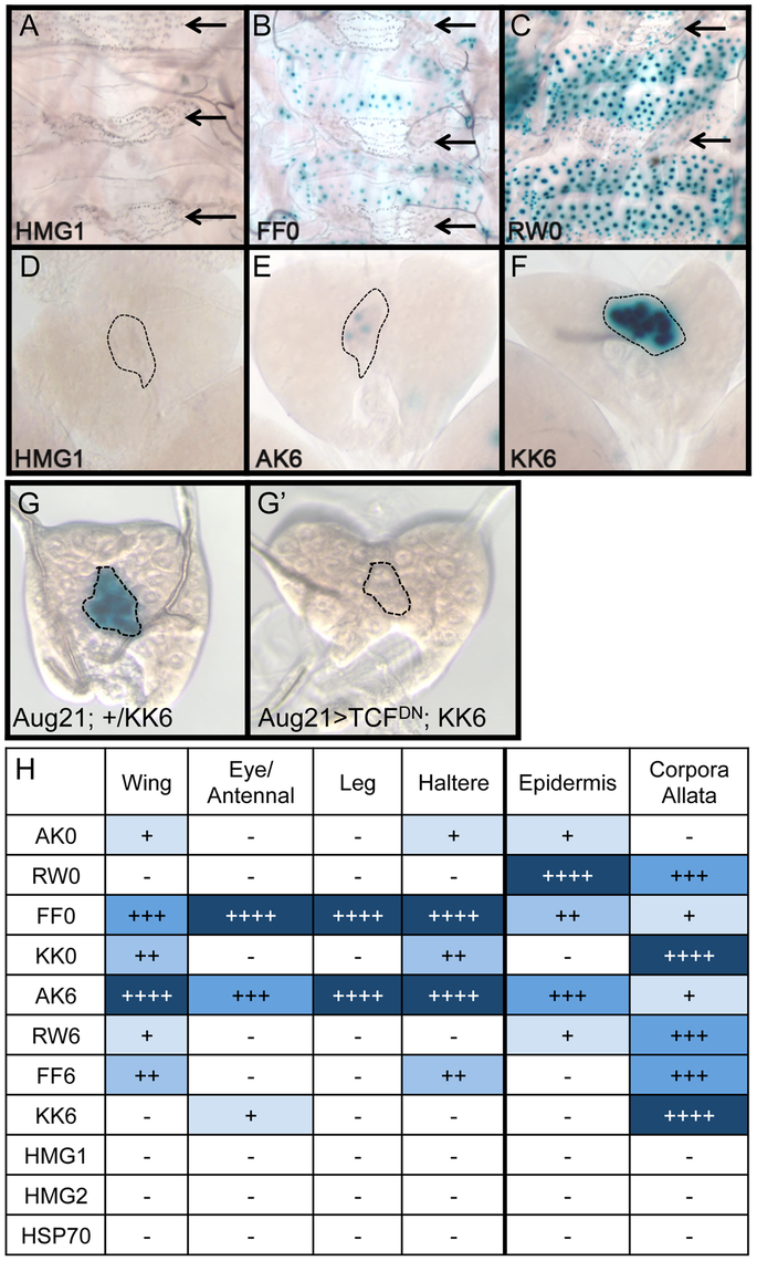 Tissue-specific activity of HMG-Helper pair reporters.