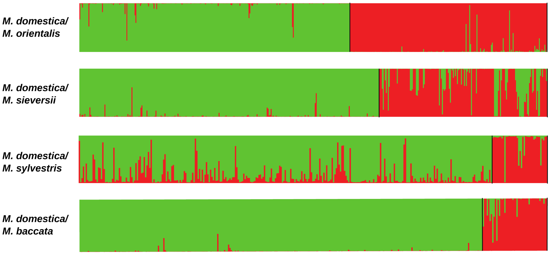 Proportions of ancestry in two ancestral genepools inferred with the STRUCTURE program, based on datasets including <i>M. domestica</i> (green, <i>N</i> = 299) and each of the four wild <i>Malus</i> species (red).