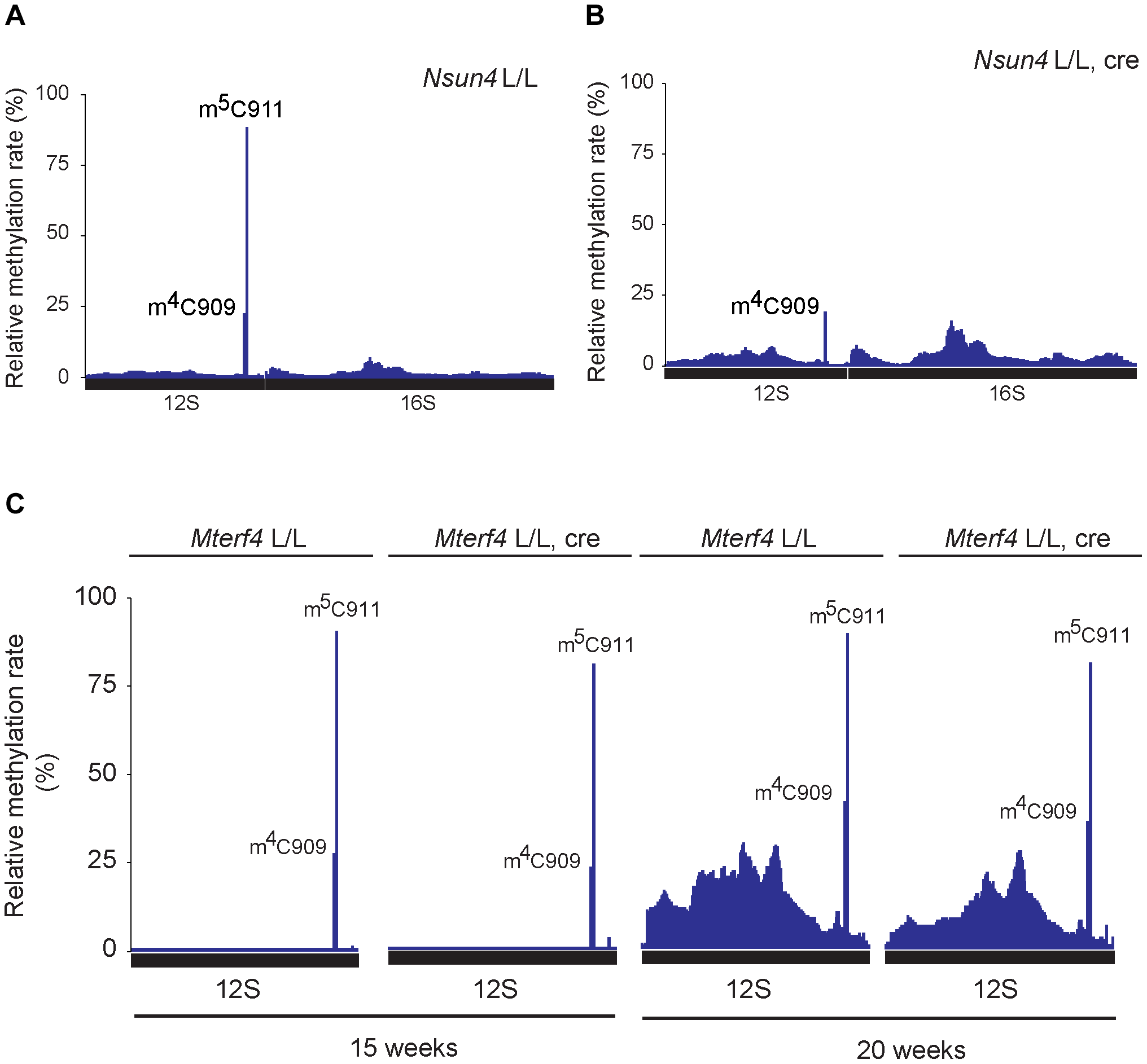 Analysis of rRNA methylation in control, <i>Nsun4</i> and <i>Mterf4</i> heart tissue specific knockout.
