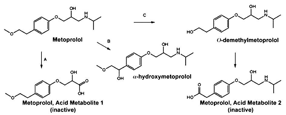 Hlavní cesty metabolismu metoprololu 4)