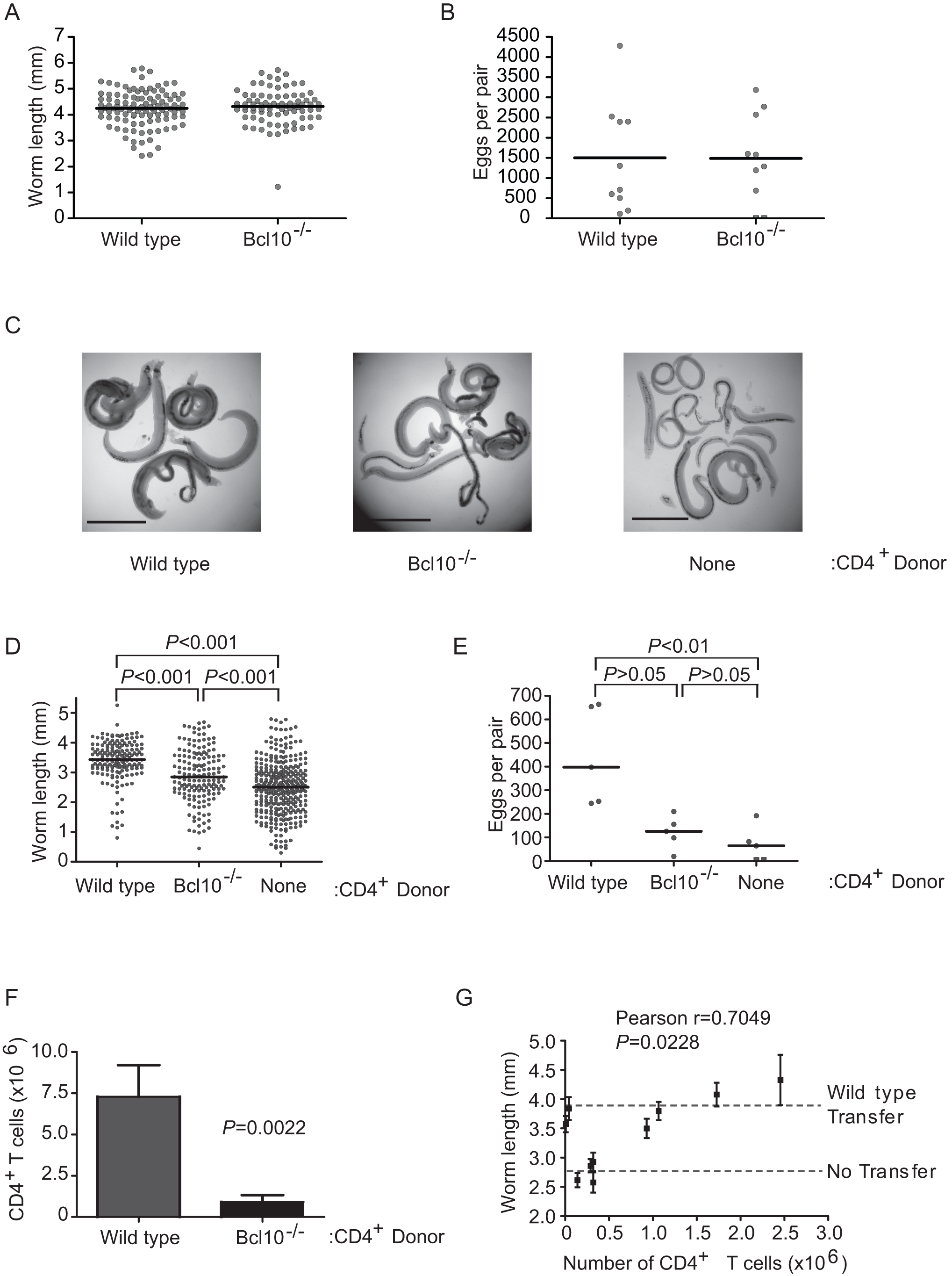TCR signaling in CD4<sup>+</sup> T cells is dispensable for <i>S. mansoni</i> development.