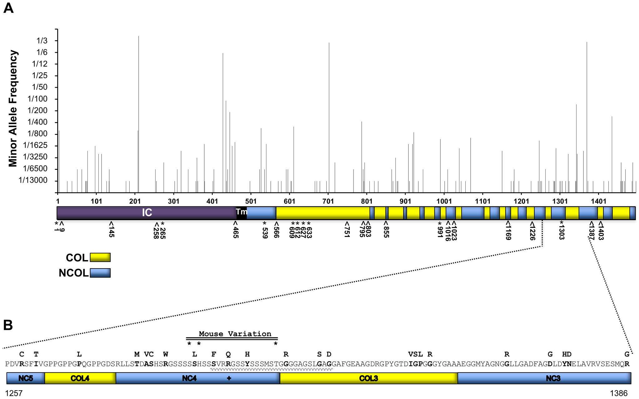 AA variation of human collagen XVII in a non-EB diagnosed human population in comparison with known JEB causing variants.
