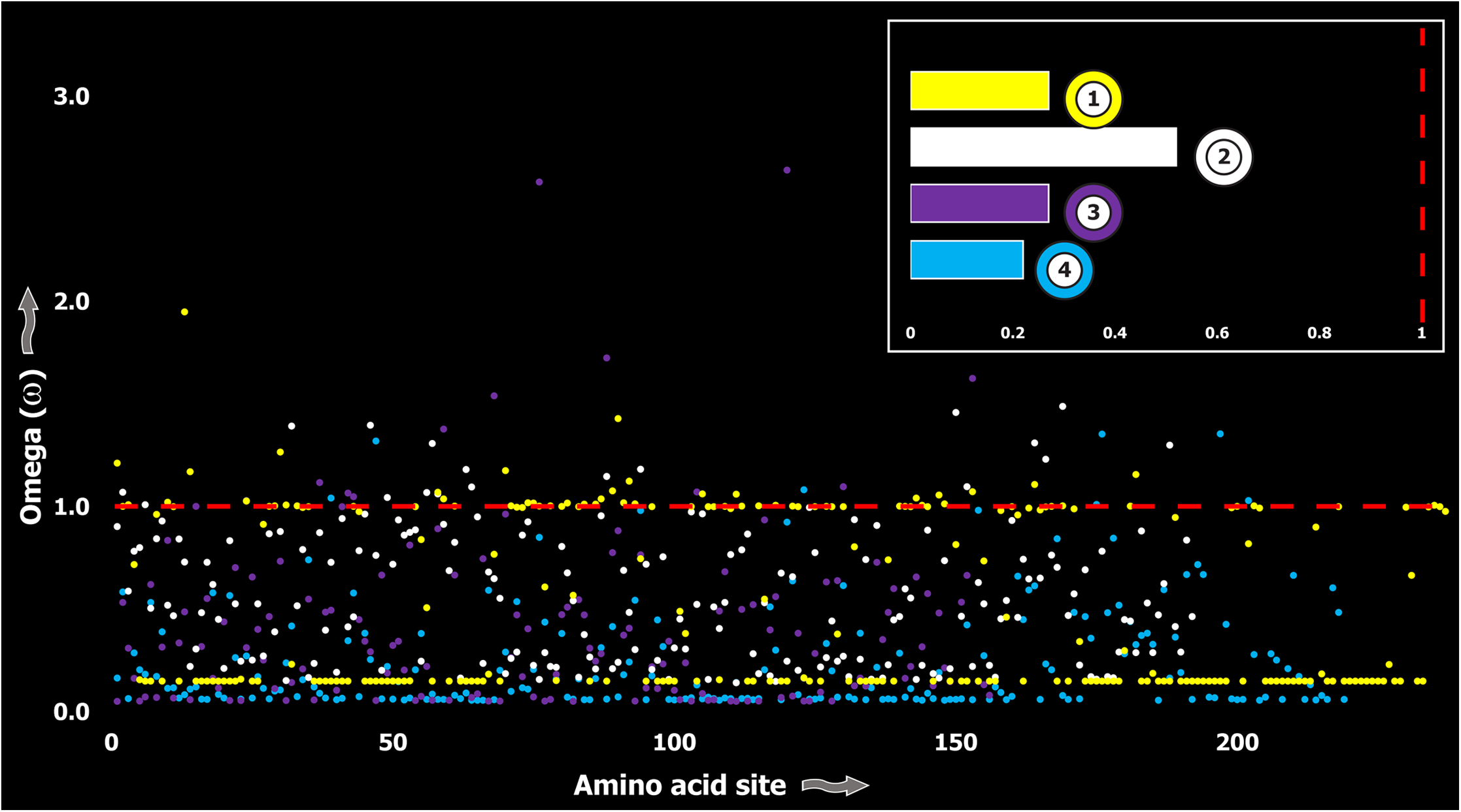 Molecular evolution of venom in coleoids.