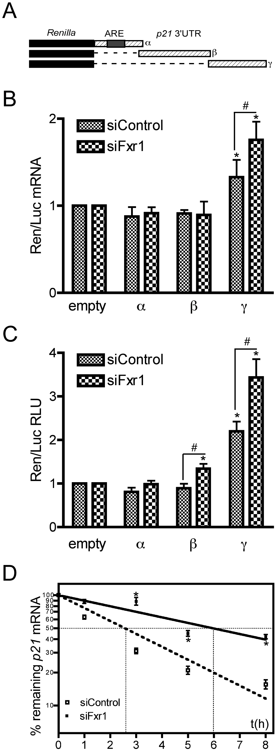 The γ portion of <i>p21</i> mRNA 3′UTR modulates the stability of the mRNA that is potentiated by FXR1P depletion.