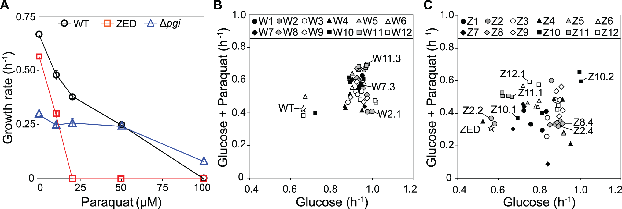 Growth rates of <i>E</i>. <i>coli</i> in M9 glucose medium.