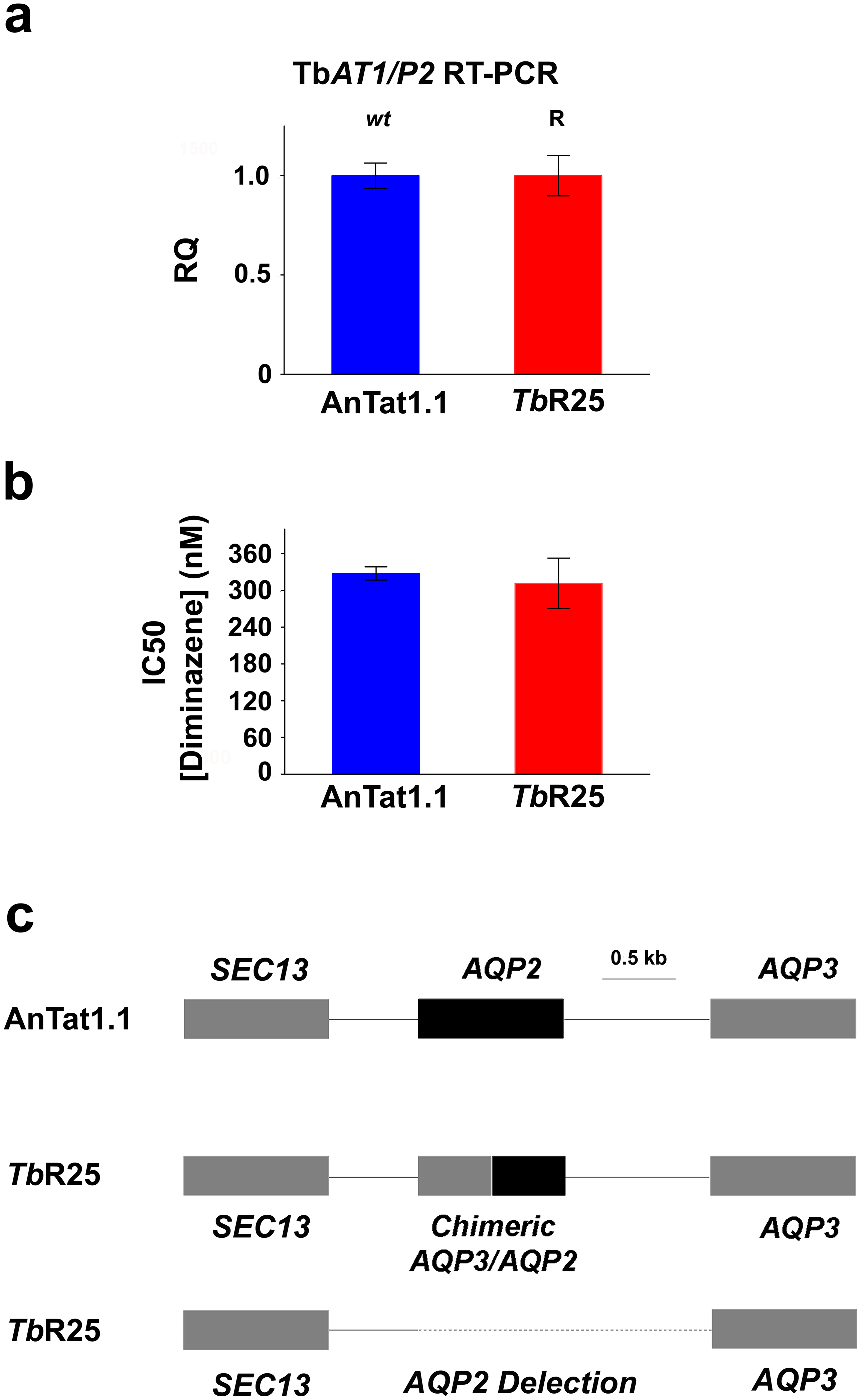 Characterization of the pentamidine resistant strain <i>Tb</i>R25.