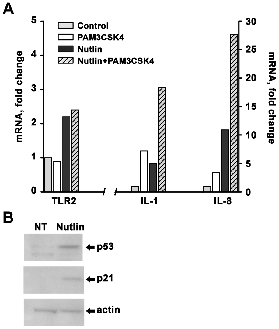 Induction of p53 sensitizes freshly isolated CD3+ cells to PAMP stimulation.
