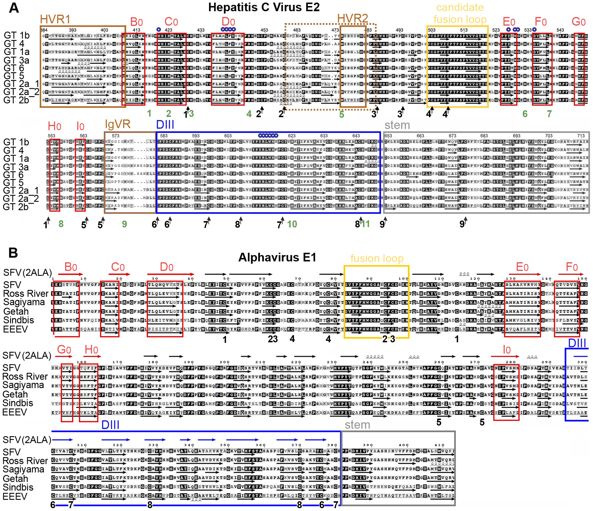 Amino acid sequence alignments and secondary structure predictions.