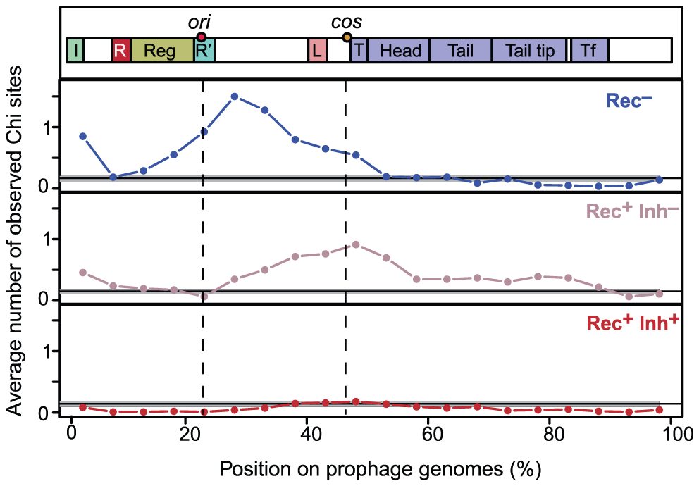 Distribution of Chi sites in lambdoid genomes.