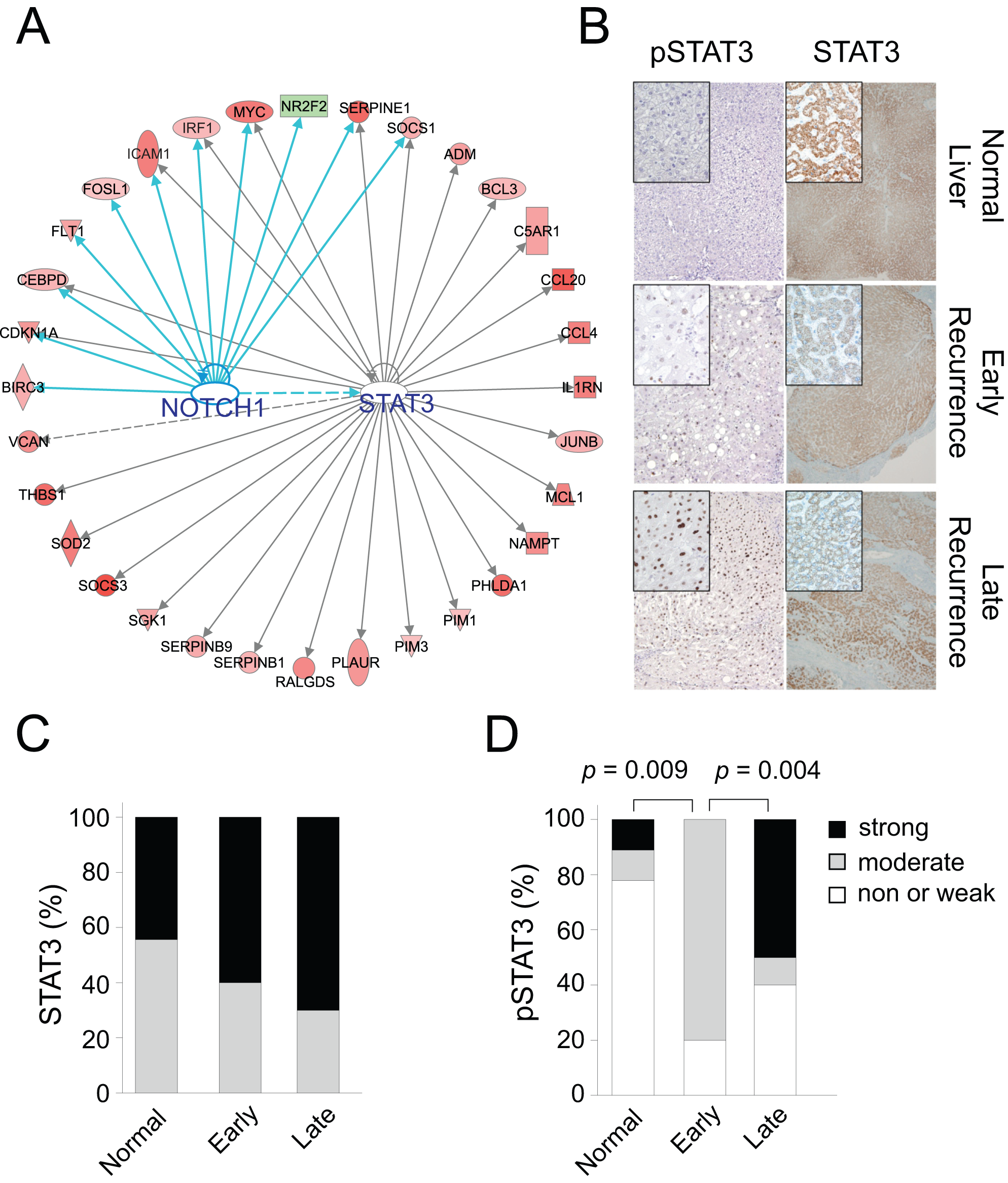 STAT3 and NOTCH1 networks in the hepatic injury and regeneration signature.