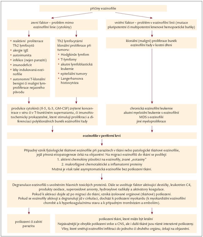Schéma 1. Etiopatogeneze eozinofilie a idiopatického hypereozinofilního syndromu.