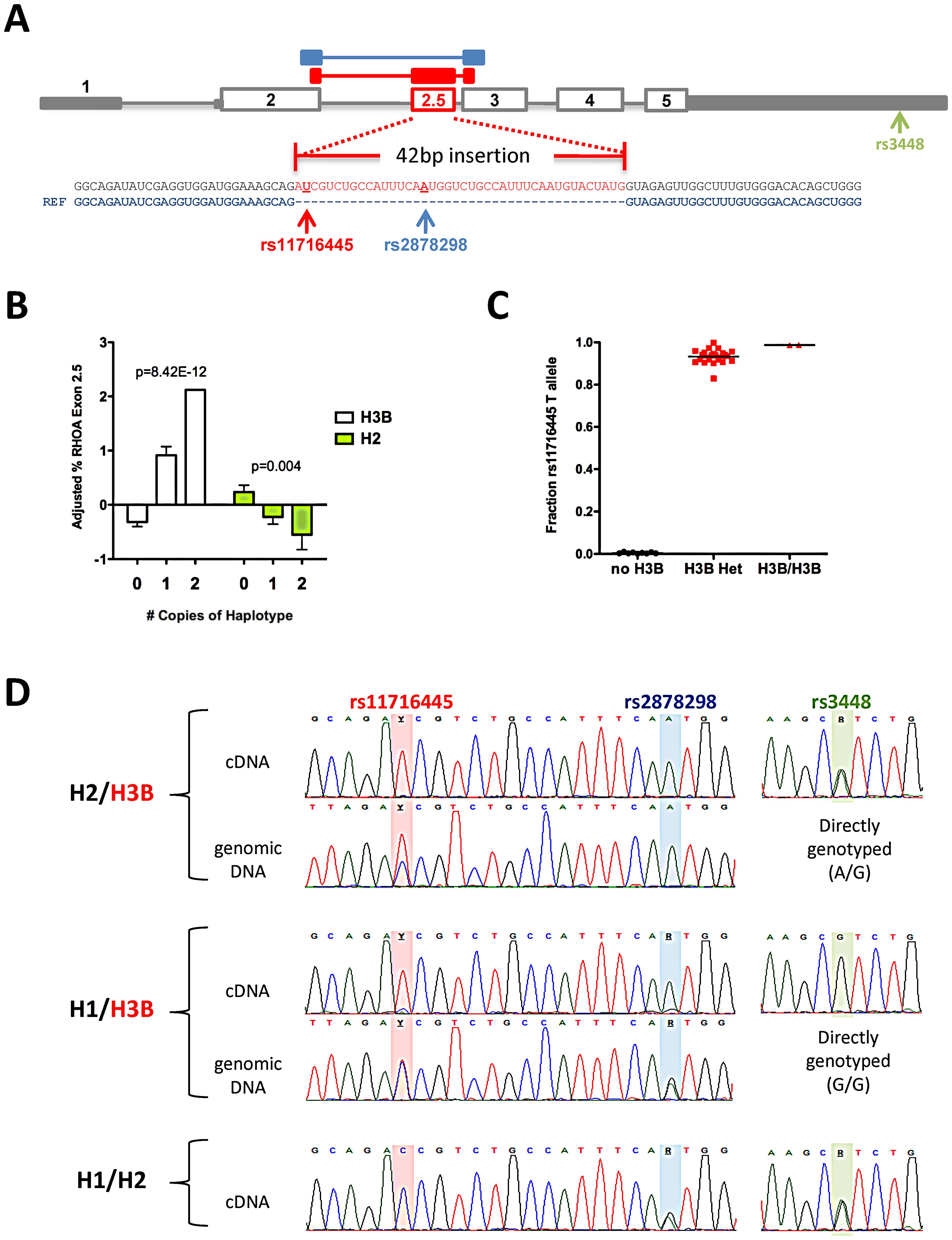 Association between <i>RHOA</i> haplotypes and expression of <i>RHOA</i> exon 2.5.