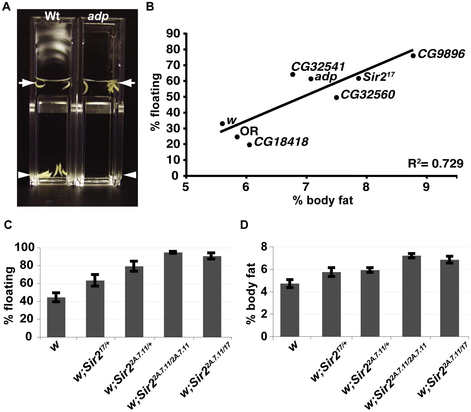 A buoyancy-based screen identifies a role for Sir2 in regulating fat levels in Drosophila larvae.