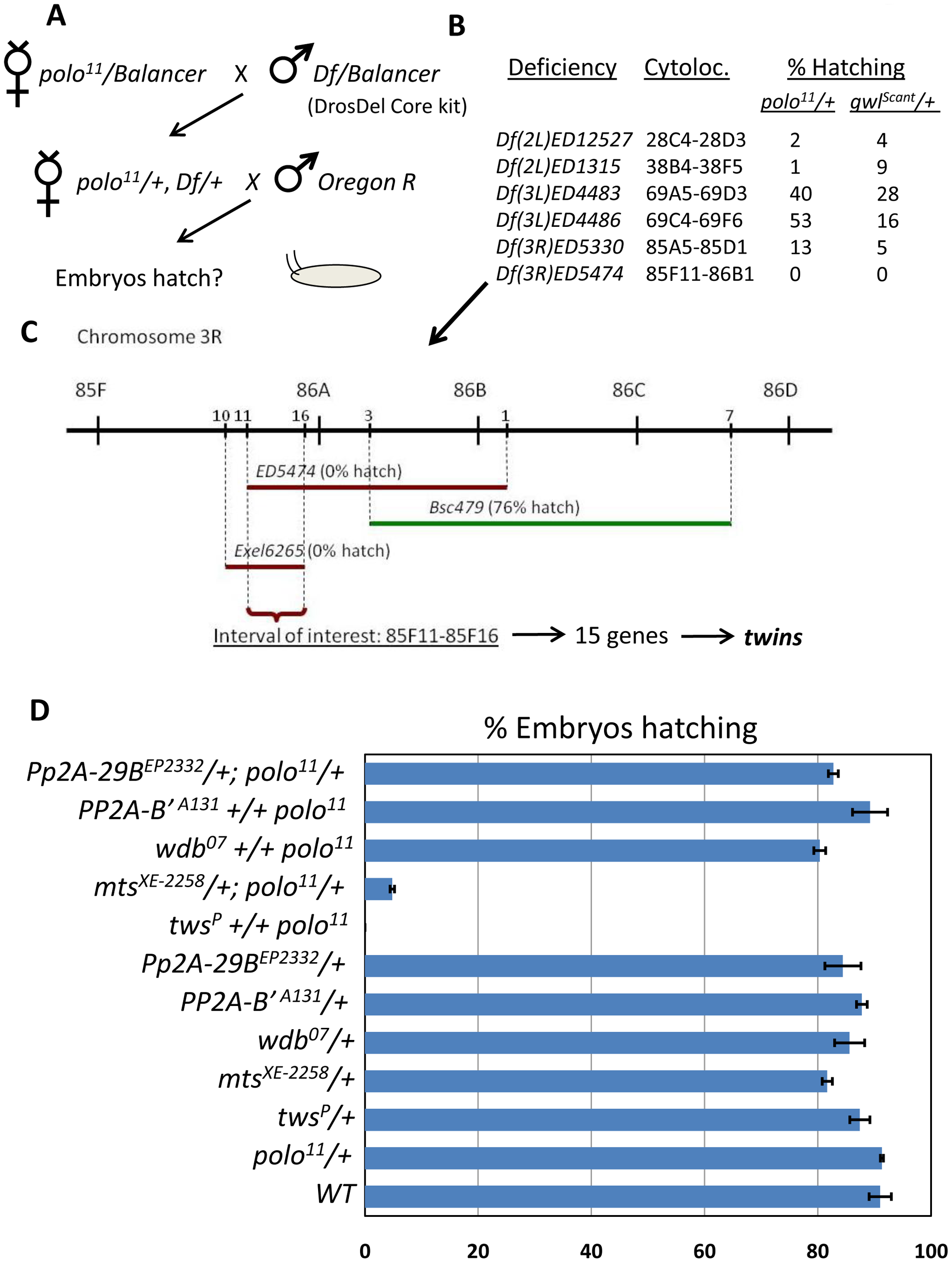 A screen for genes functioning with <i>polo</i> identifies the PP2A subunit genes <i>twins</i> and <i>microtubule star</i>.