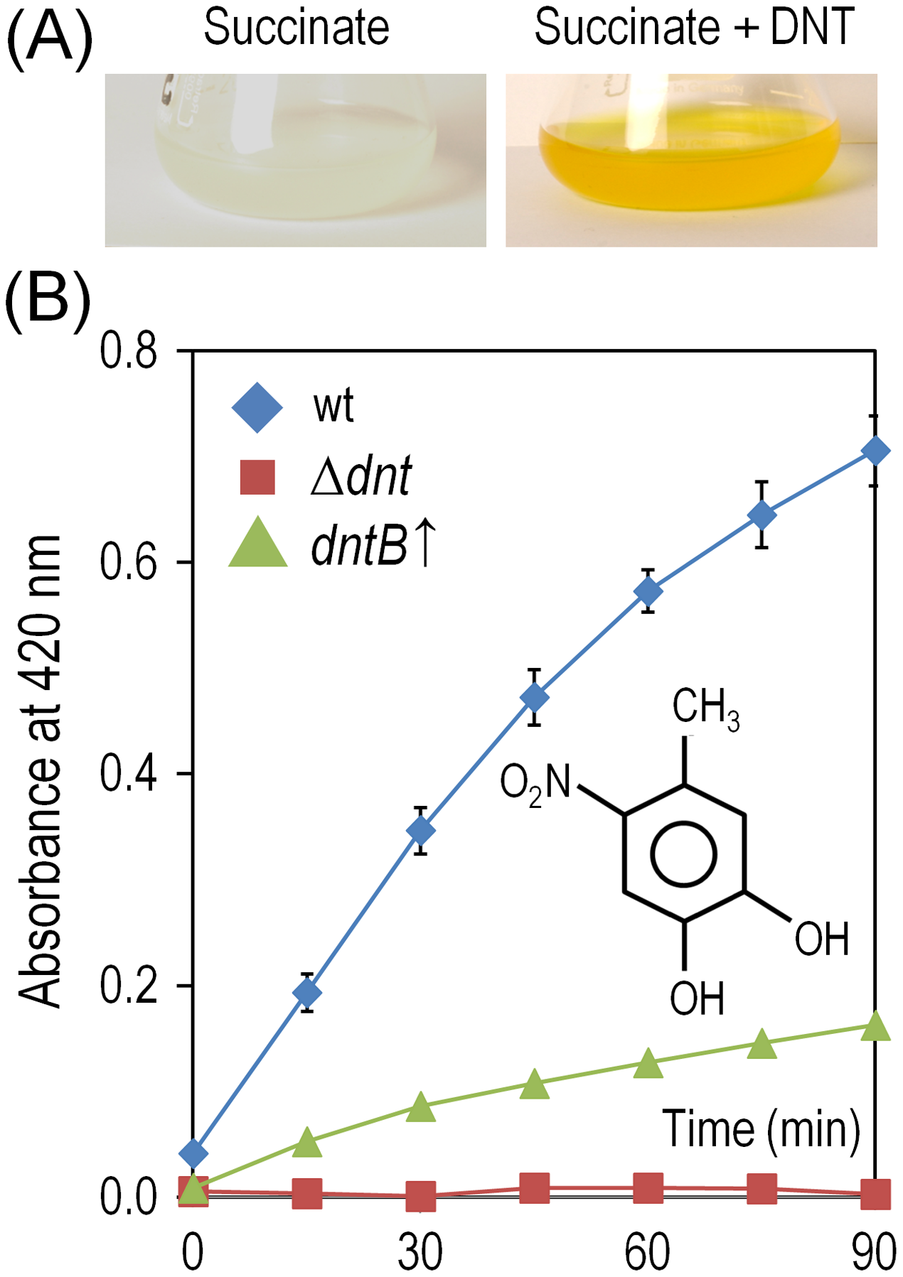 Accumulation and removal of 4-methyl-5-nitrocathecol (4M5NC) in <i>Burkholderia</i> sp. DNT and derivatives exposed to DNT.